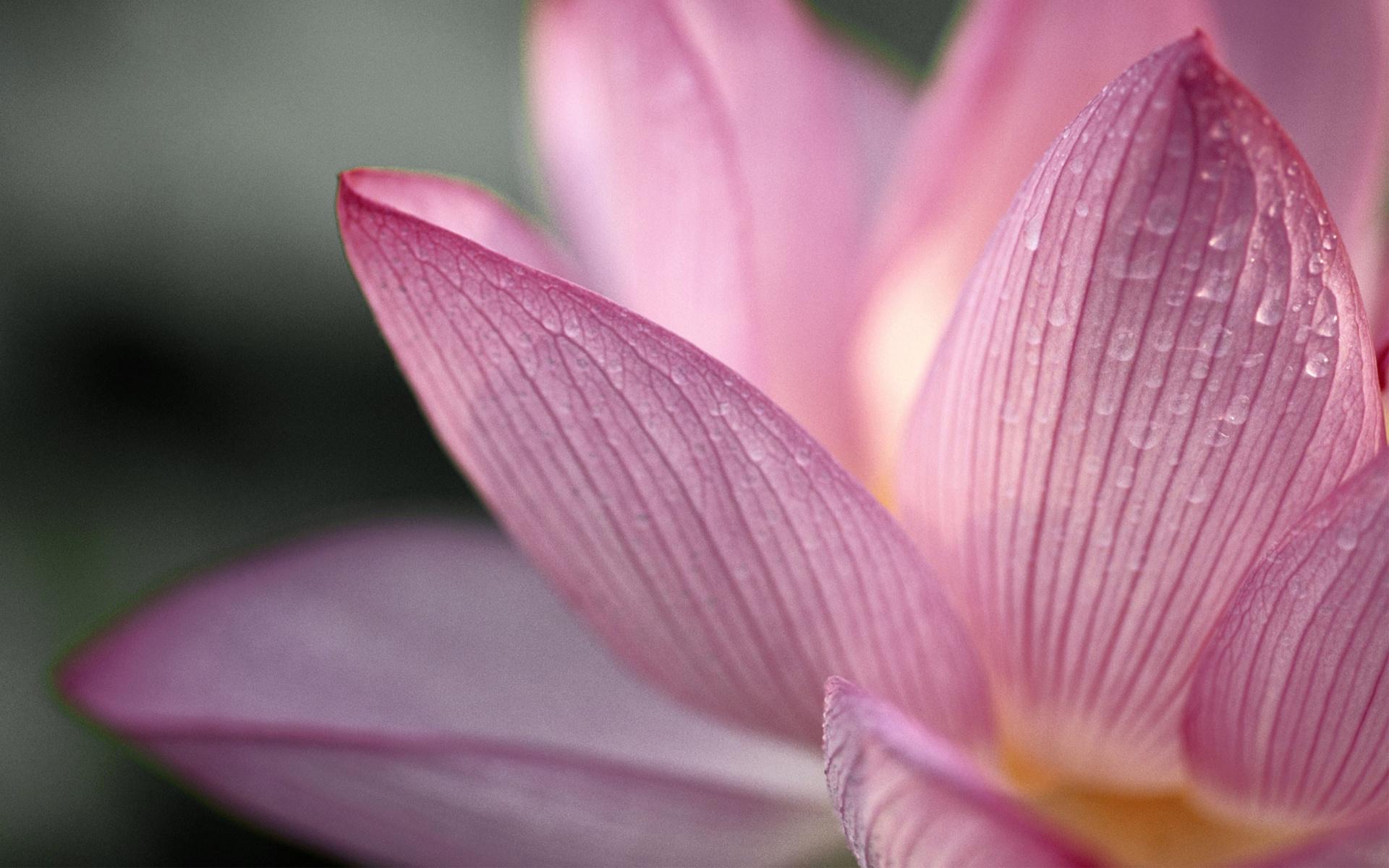 капля макро цветок  № 2540784 загрузить