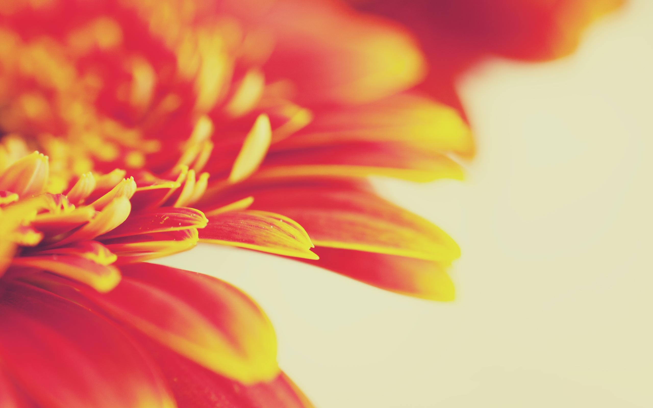 Красные оранжевые цветы скачать