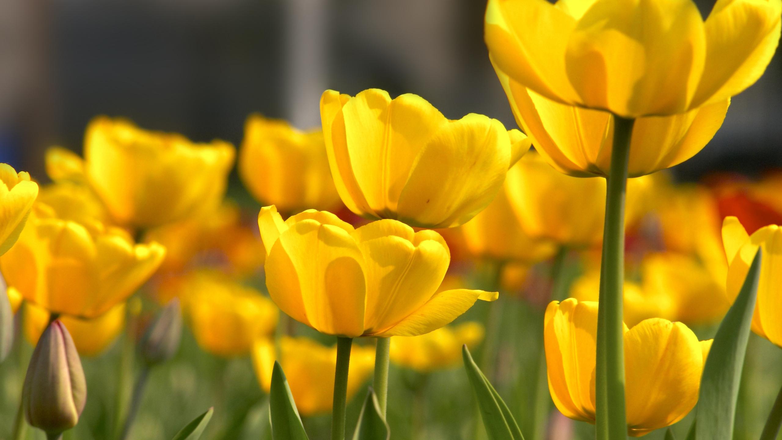 Желтый цветок  № 671031 без смс