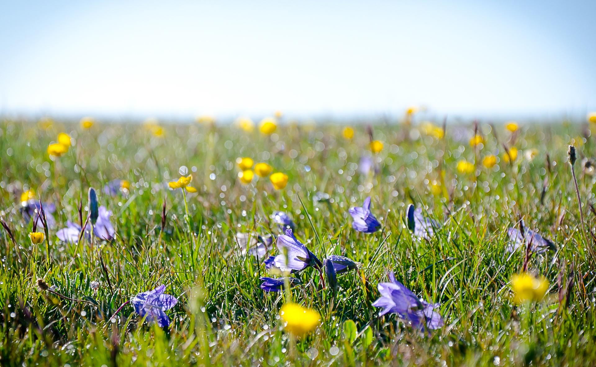 Трава цветы поле луг бесплатно
