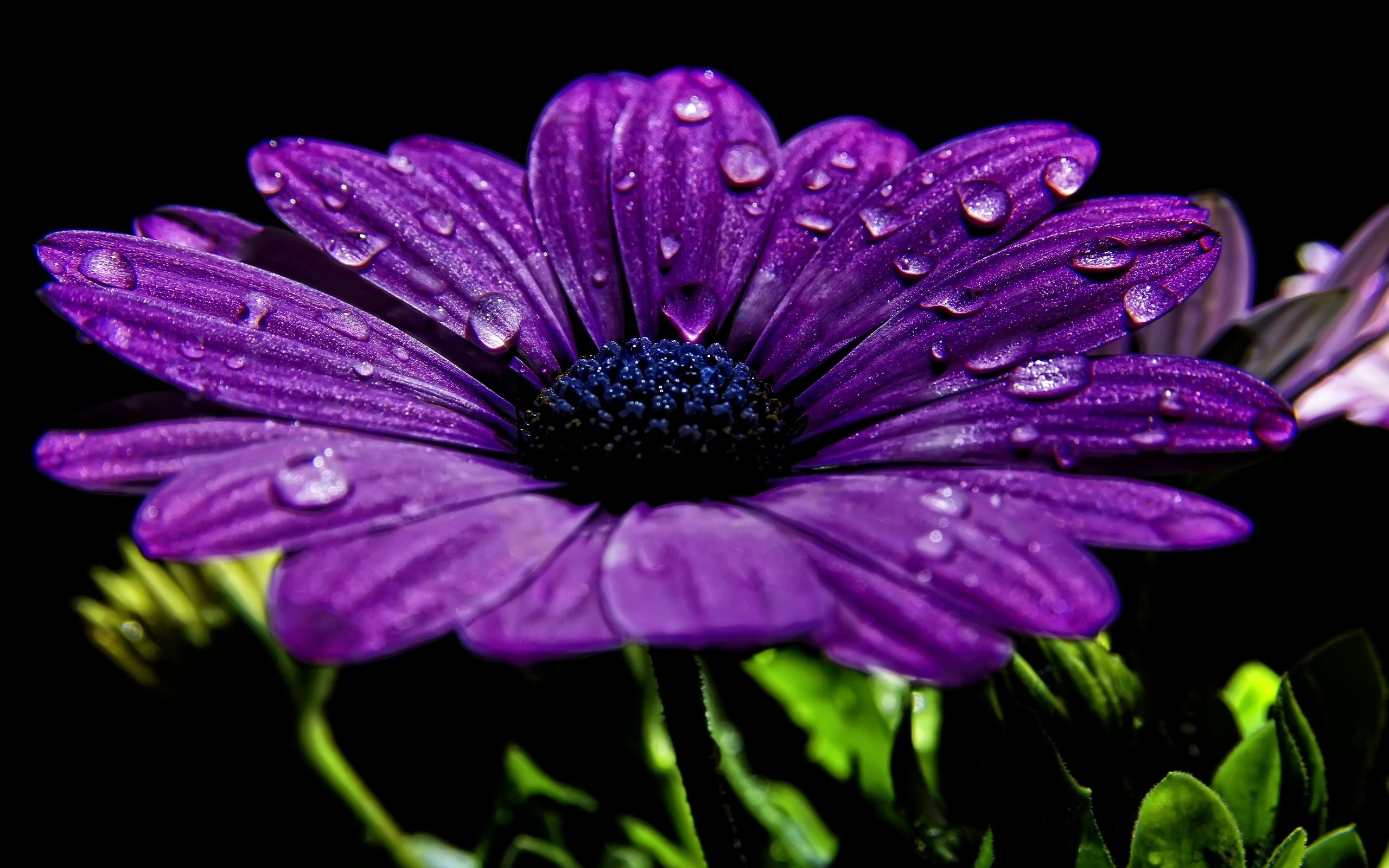 цветок фиолетовый  № 814211  скачать