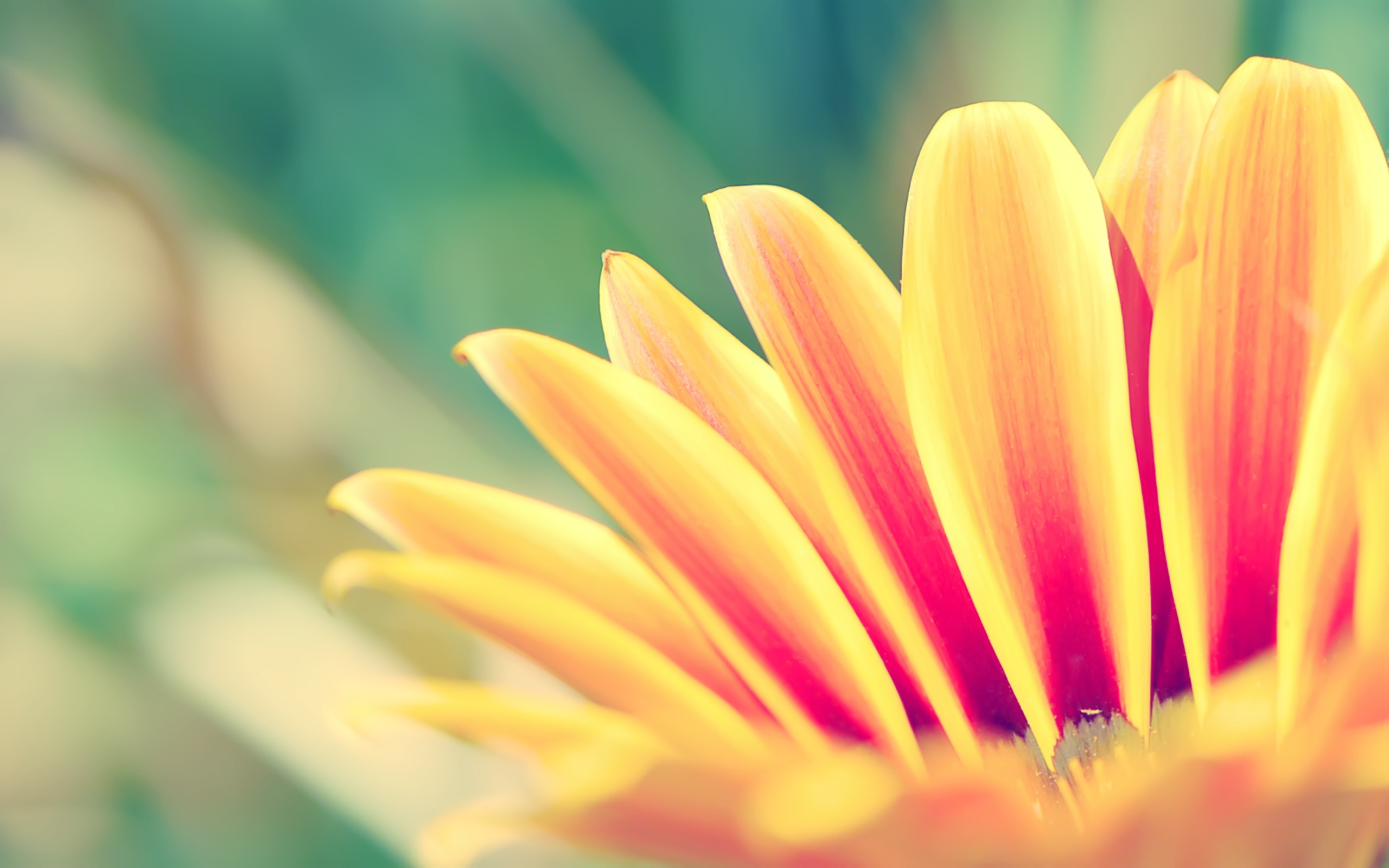 яркие цветочки загрузить