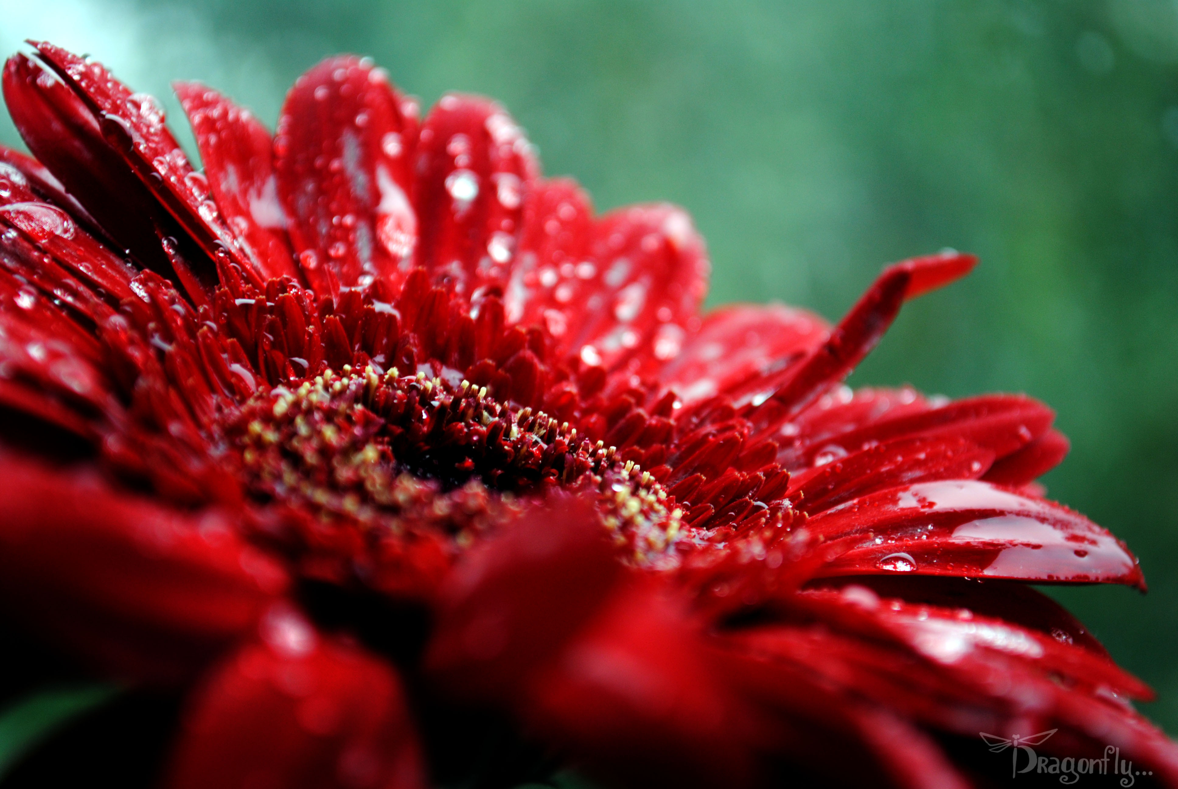 damion flower - HD1440×900
