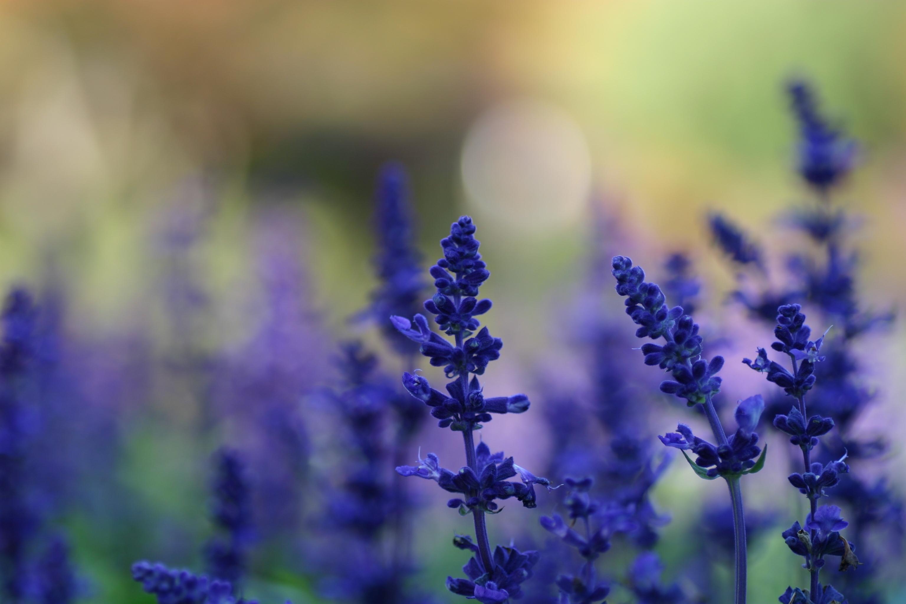 природа синие цветы nature blue flowers  № 1376474 загрузить