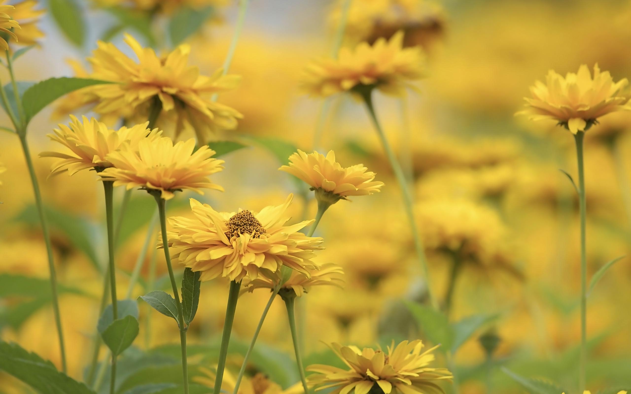 природа цветы желтый nature flowers yellow скачать