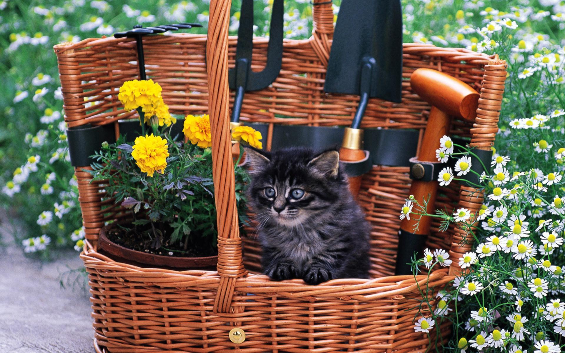 两只小猫咪  木桶里的小猫咪壁纸图片1  猫猫壁纸酷 wallcoocom