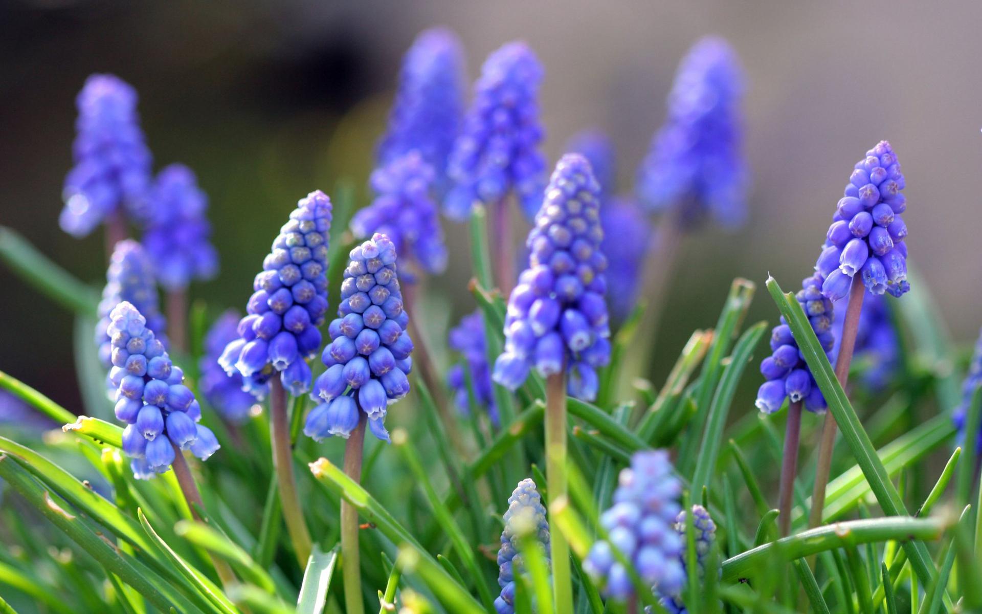Рублевское шоссе, цветы с фиолетовыми цветами садовые