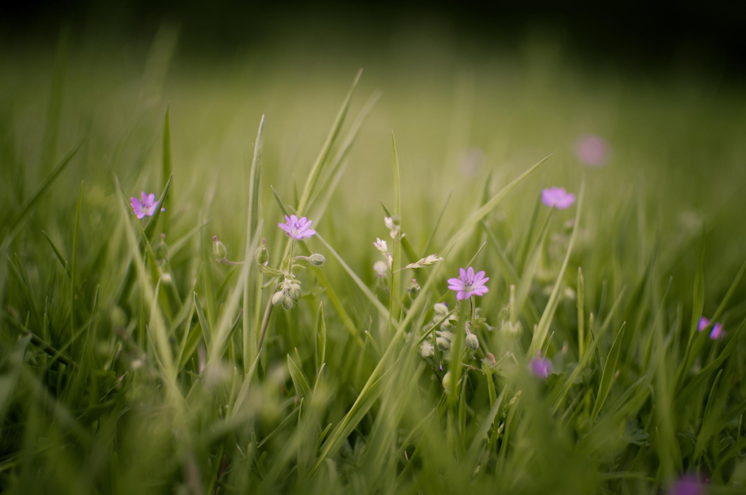 природа макро трава  № 2758812 загрузить