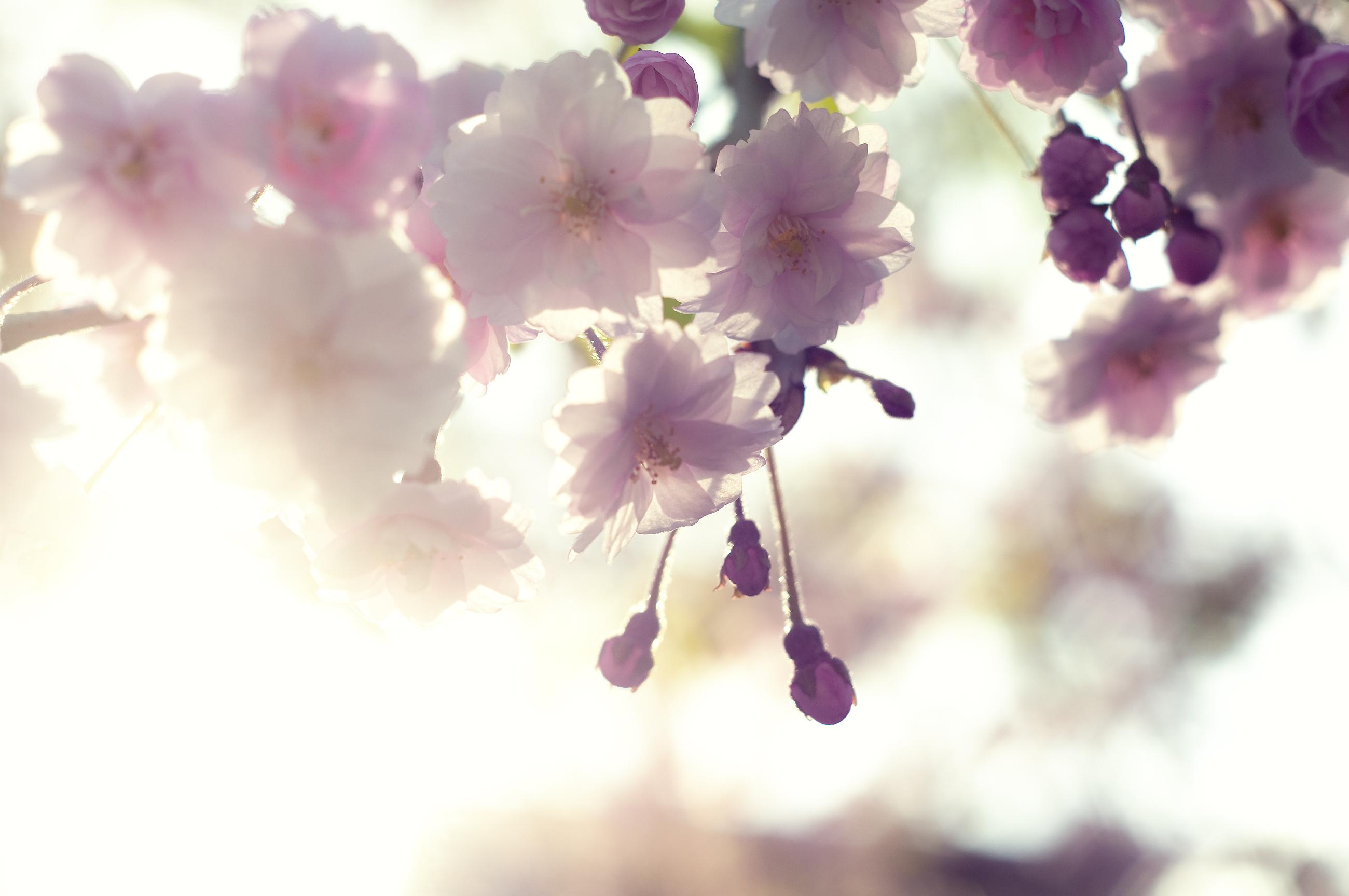 нежные цветочки на ветке  № 1333958 бесплатно