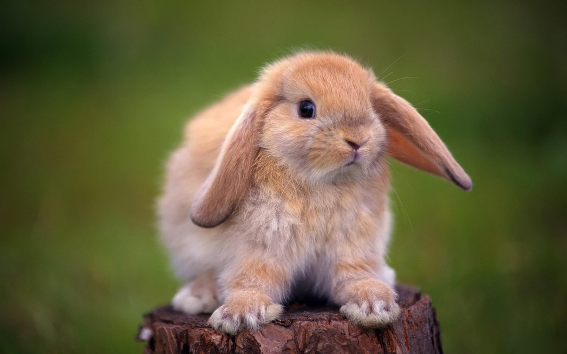 испуганный кролик  № 367634 без смс