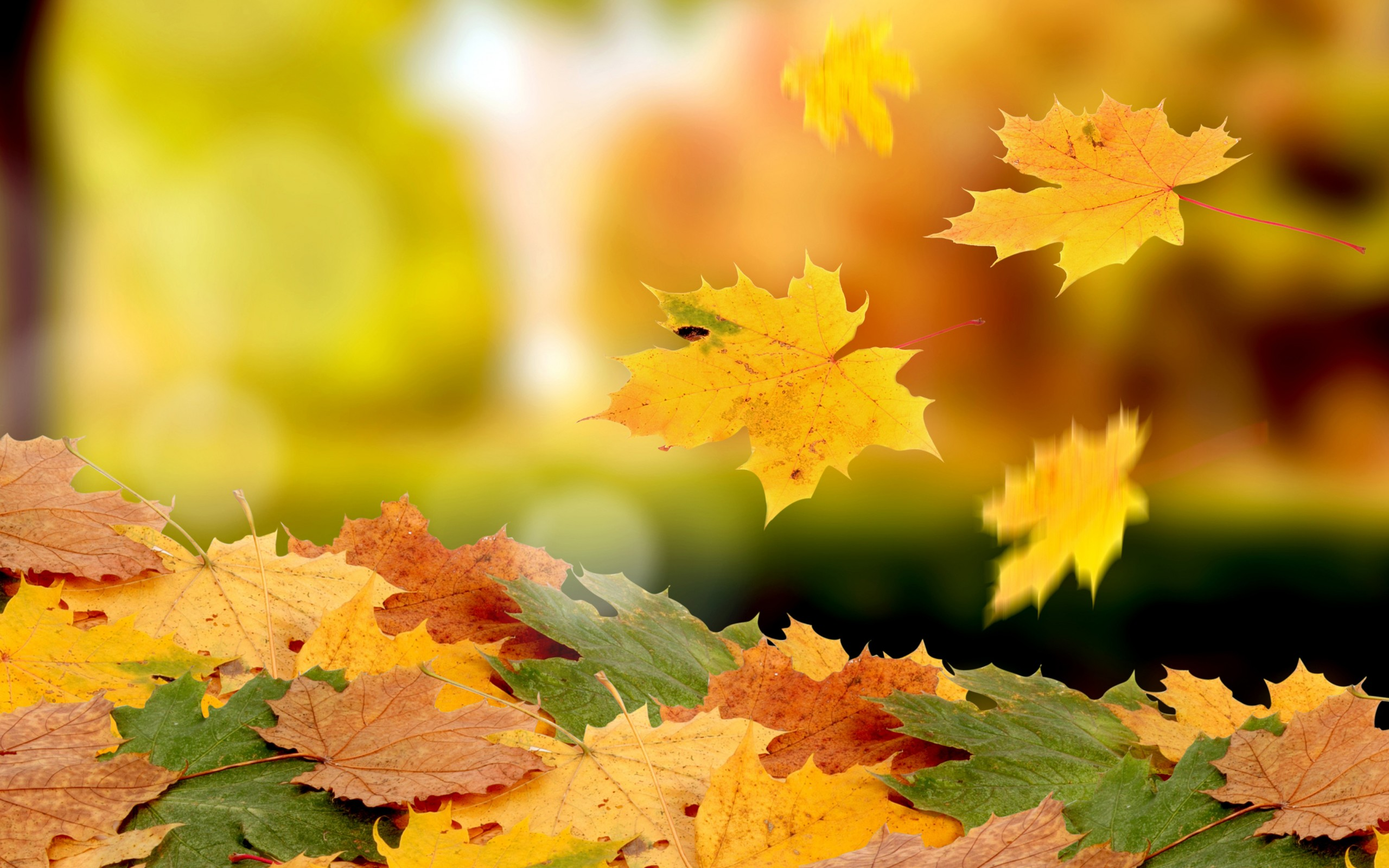 картинки осень листья падают красивые меня