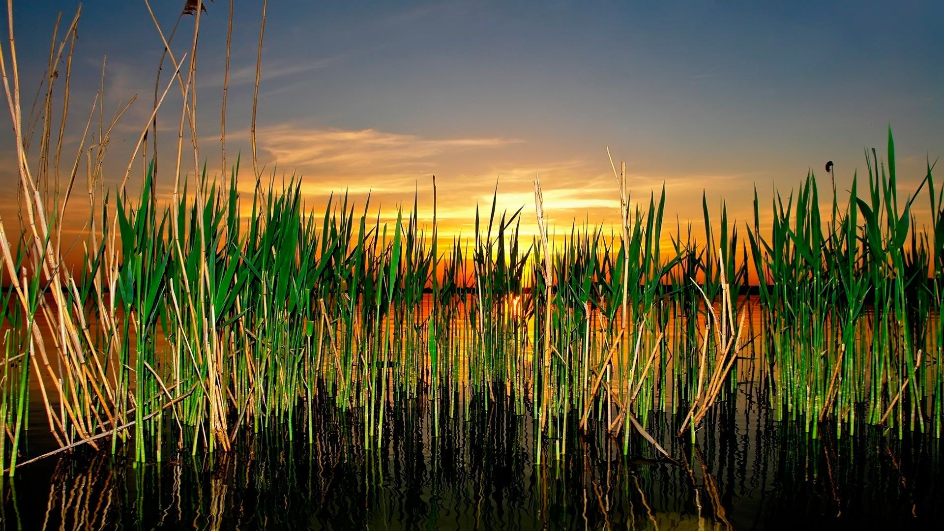 пристань трава озеро небо смотреть