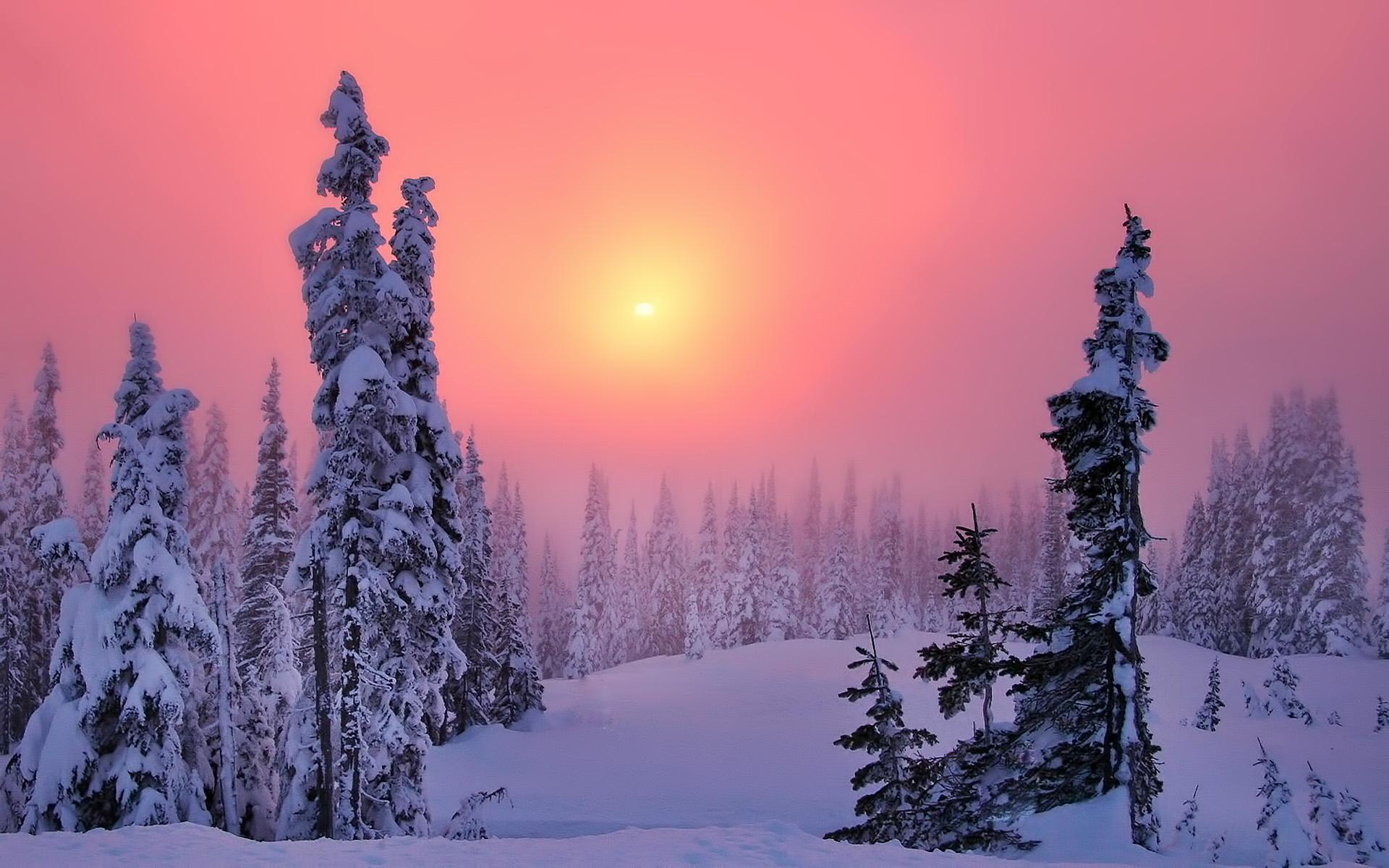 Зимний рассвет бесплатно