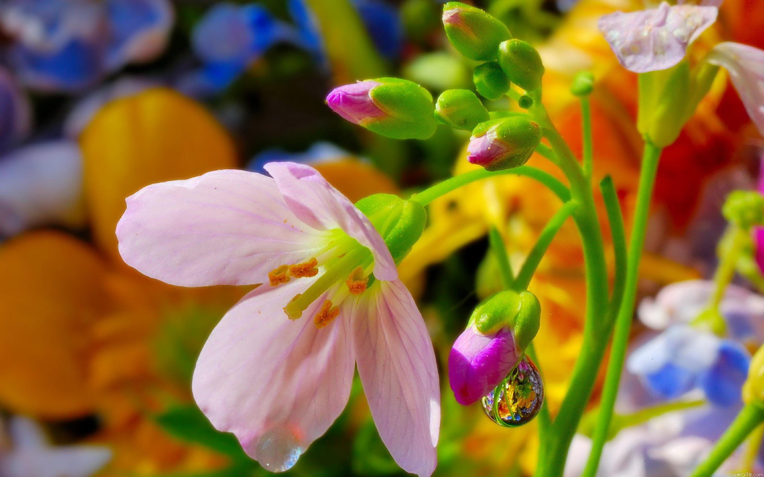 Качественные обои для рабочего стола цветы
