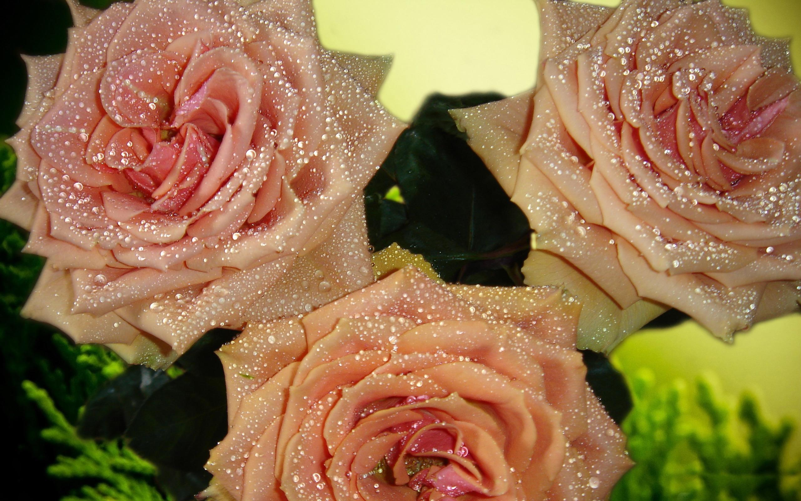 Прощенное воскресенье, картинки цветы с блестками