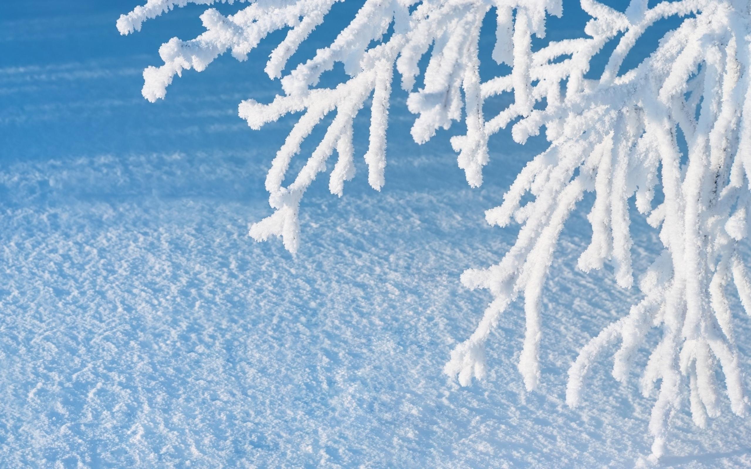 снег иней зима snow frost winter скачать