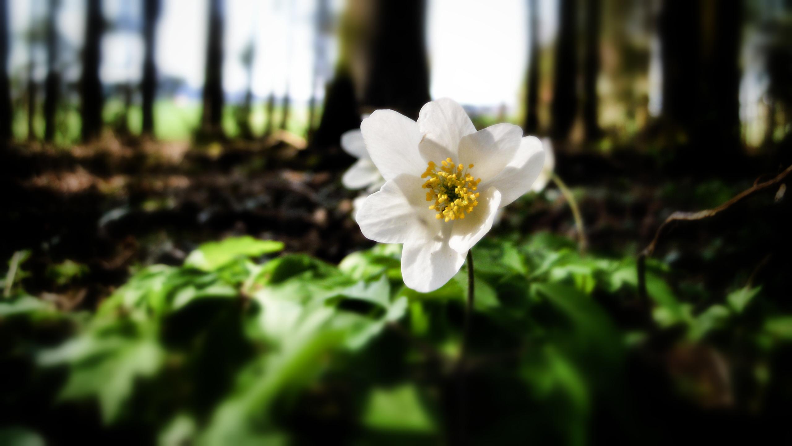цветы лесные flowers forest без смс