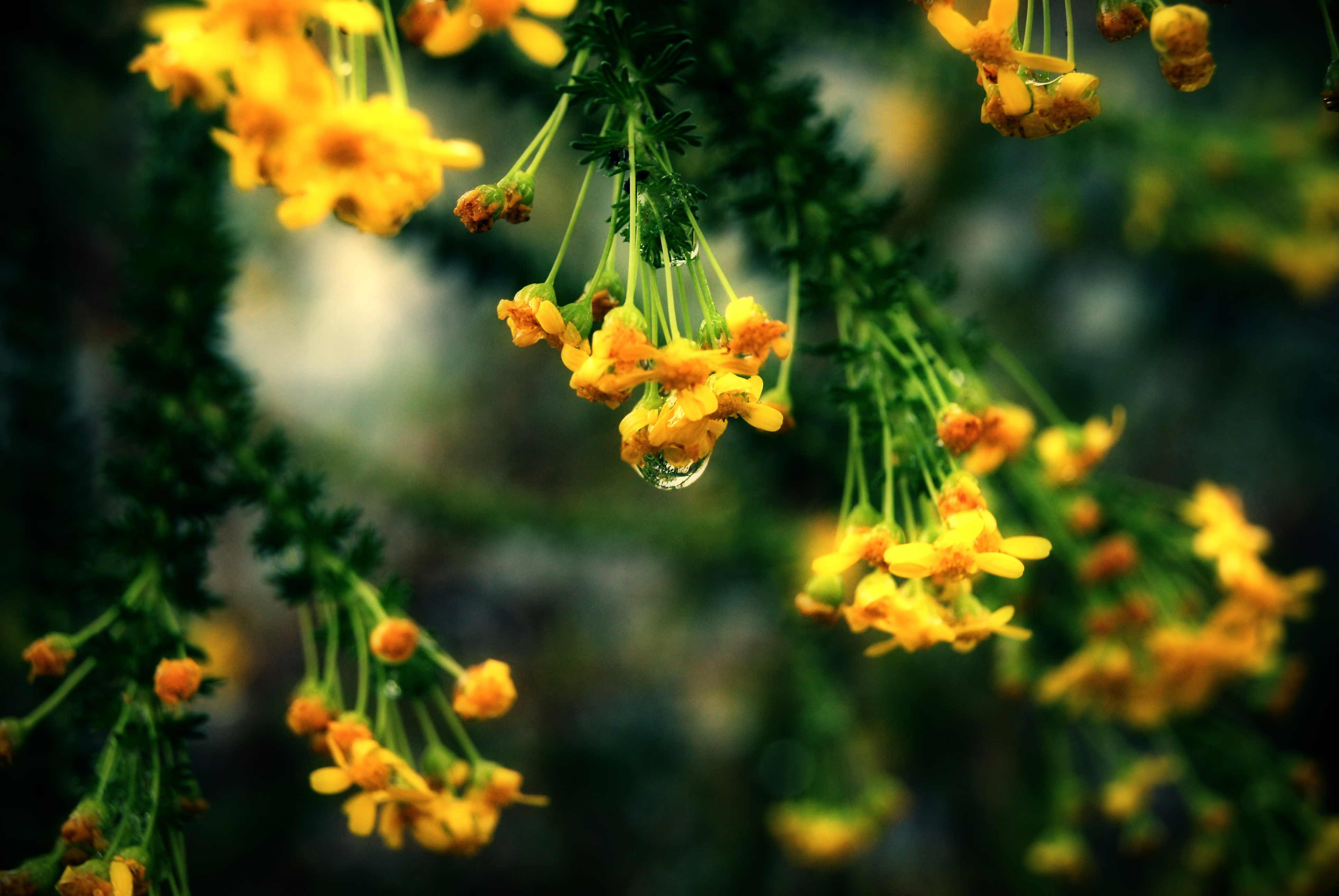 природа цветы листья  № 2053471 загрузить