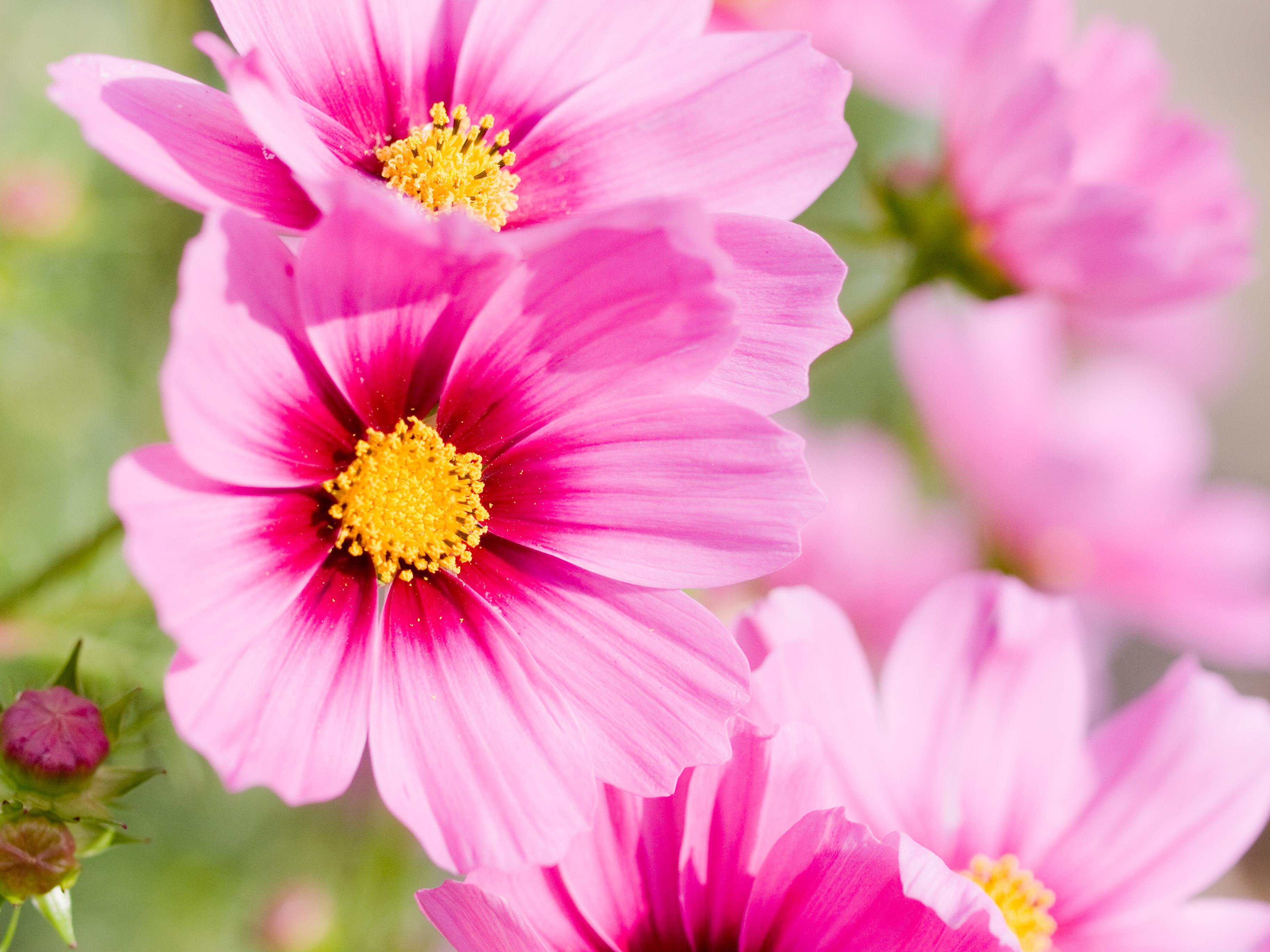 цветы фотографии: