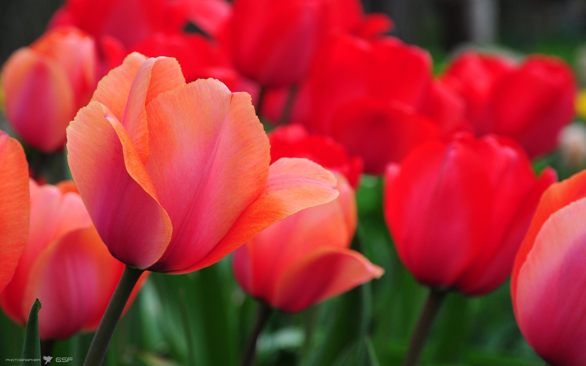 Фото полевых цветов в хорошем качестве кыздар барма