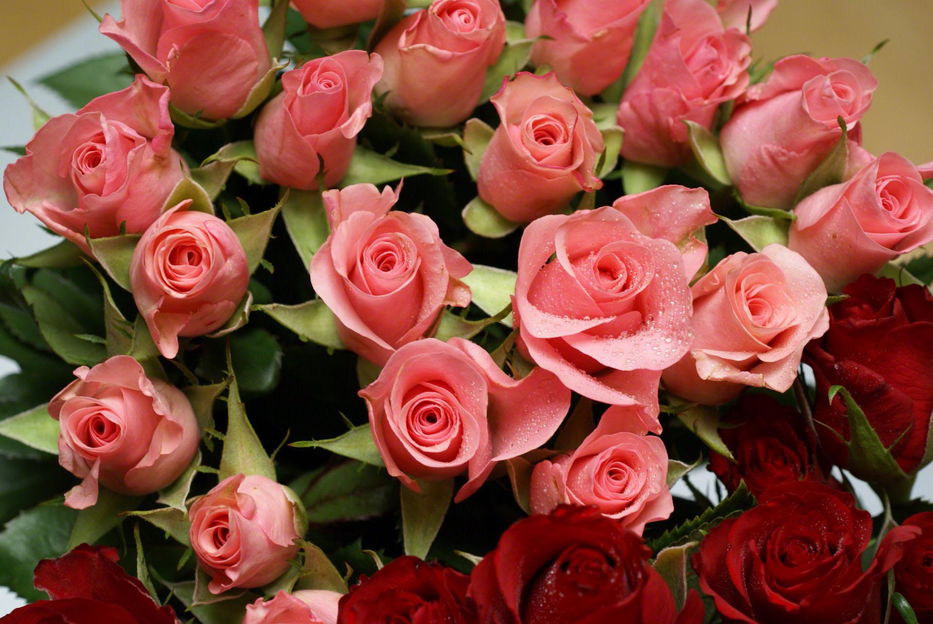 Картинки, очень красивые розы открытка
