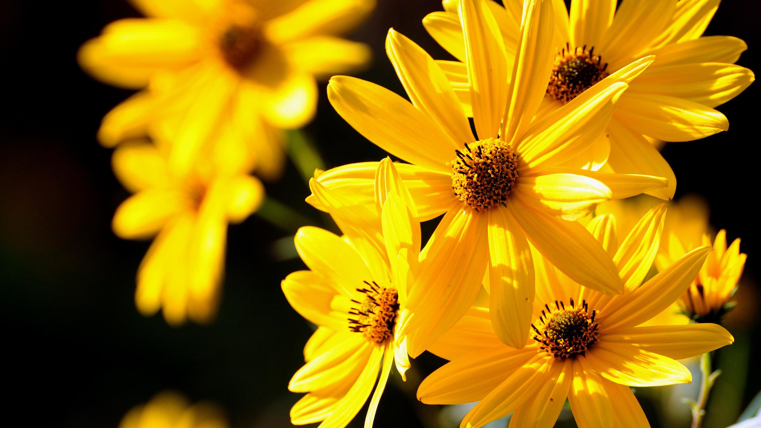 цветок желтый flower yellow  № 1246575 загрузить