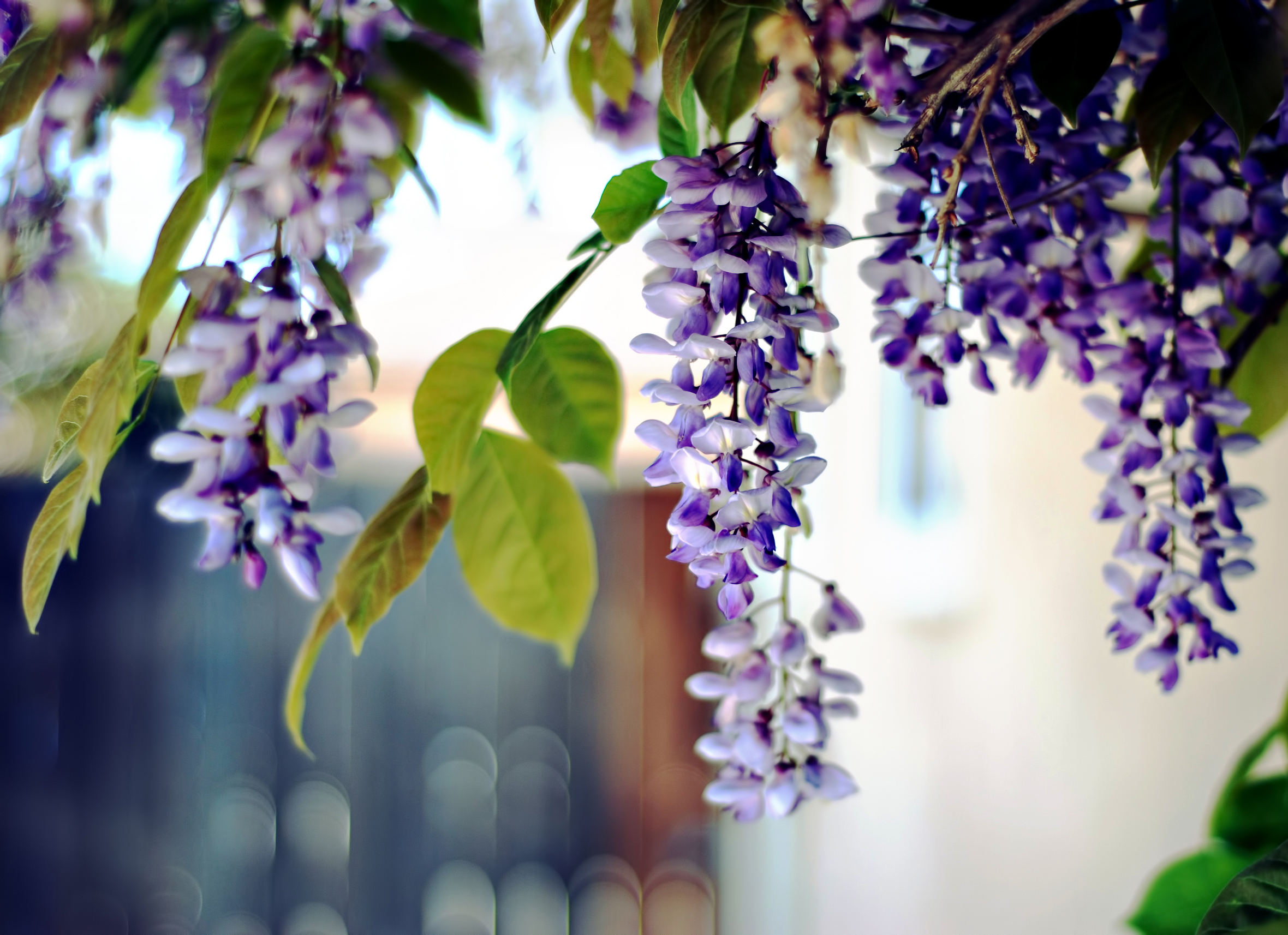 природа цветы листья  № 2053539 загрузить