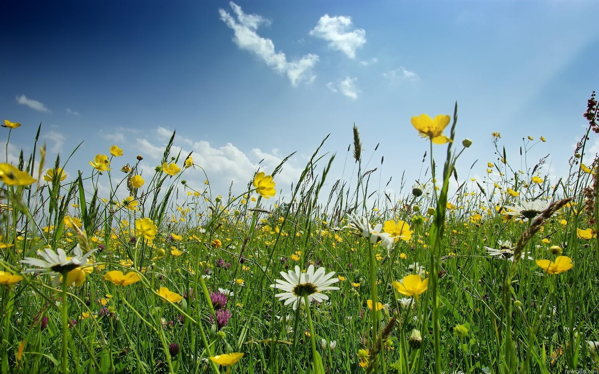 трава луг лето  № 3797025 загрузить