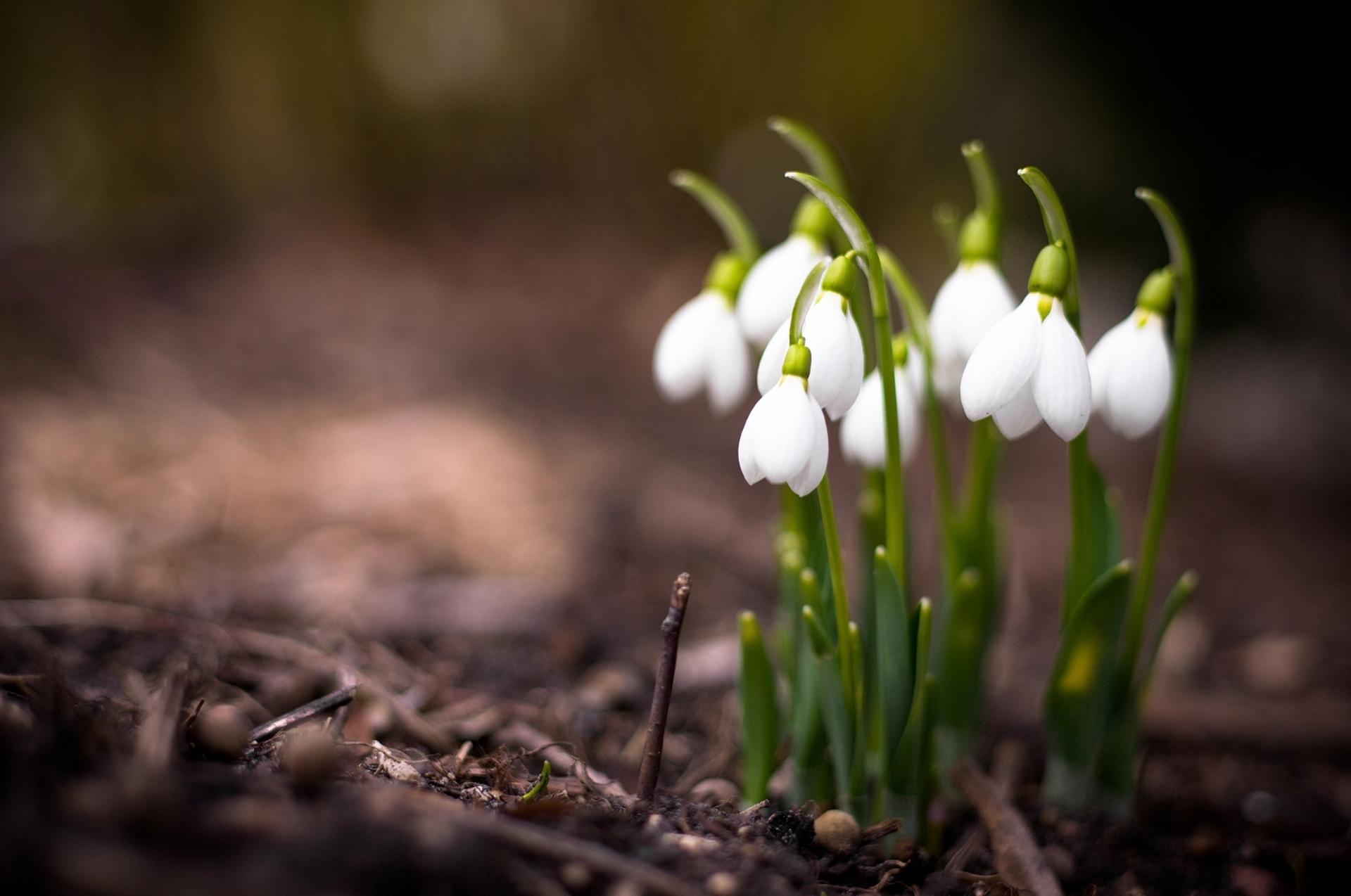 скачать фото природа и растение