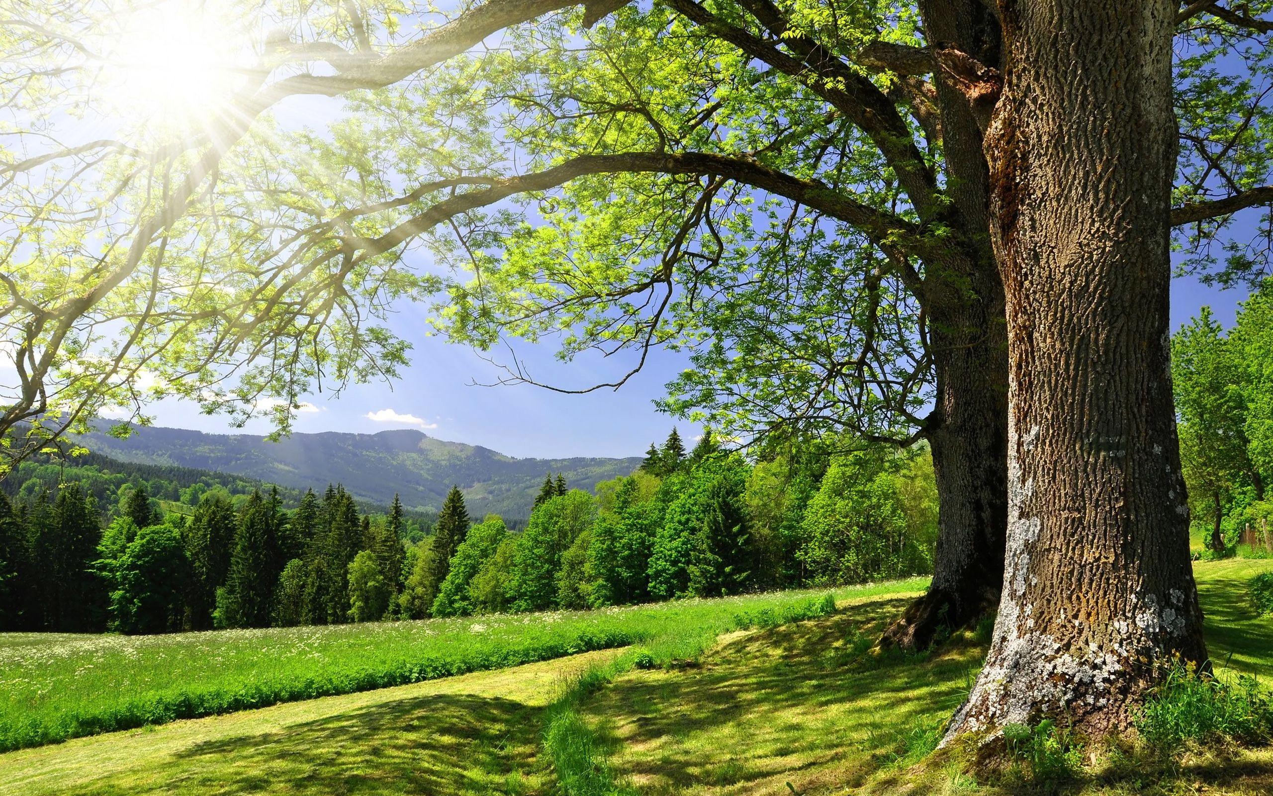 Горы зелень лето бесплатно