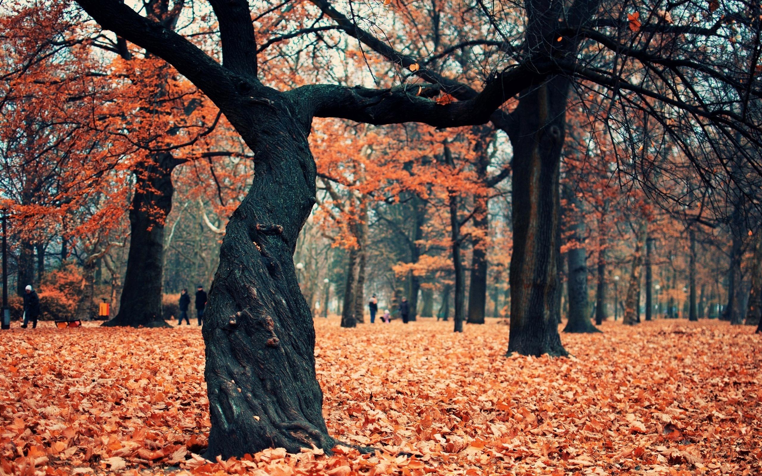 дерево листья парк  № 438474 загрузить