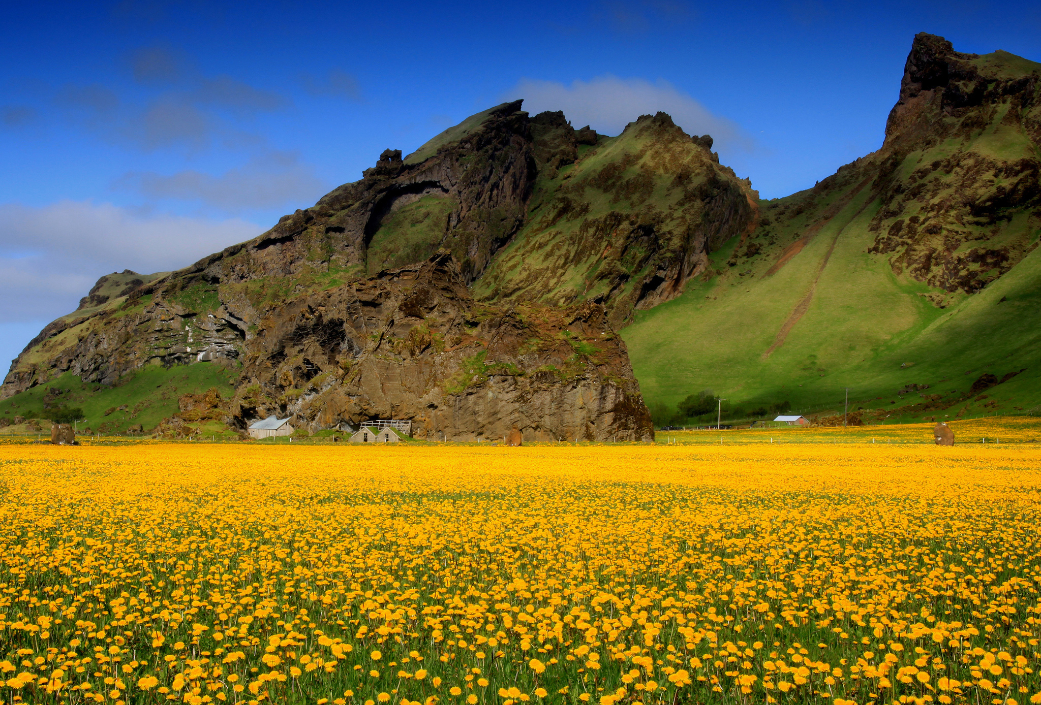 горы, ели, цветочная поляна  № 3586980 бесплатно