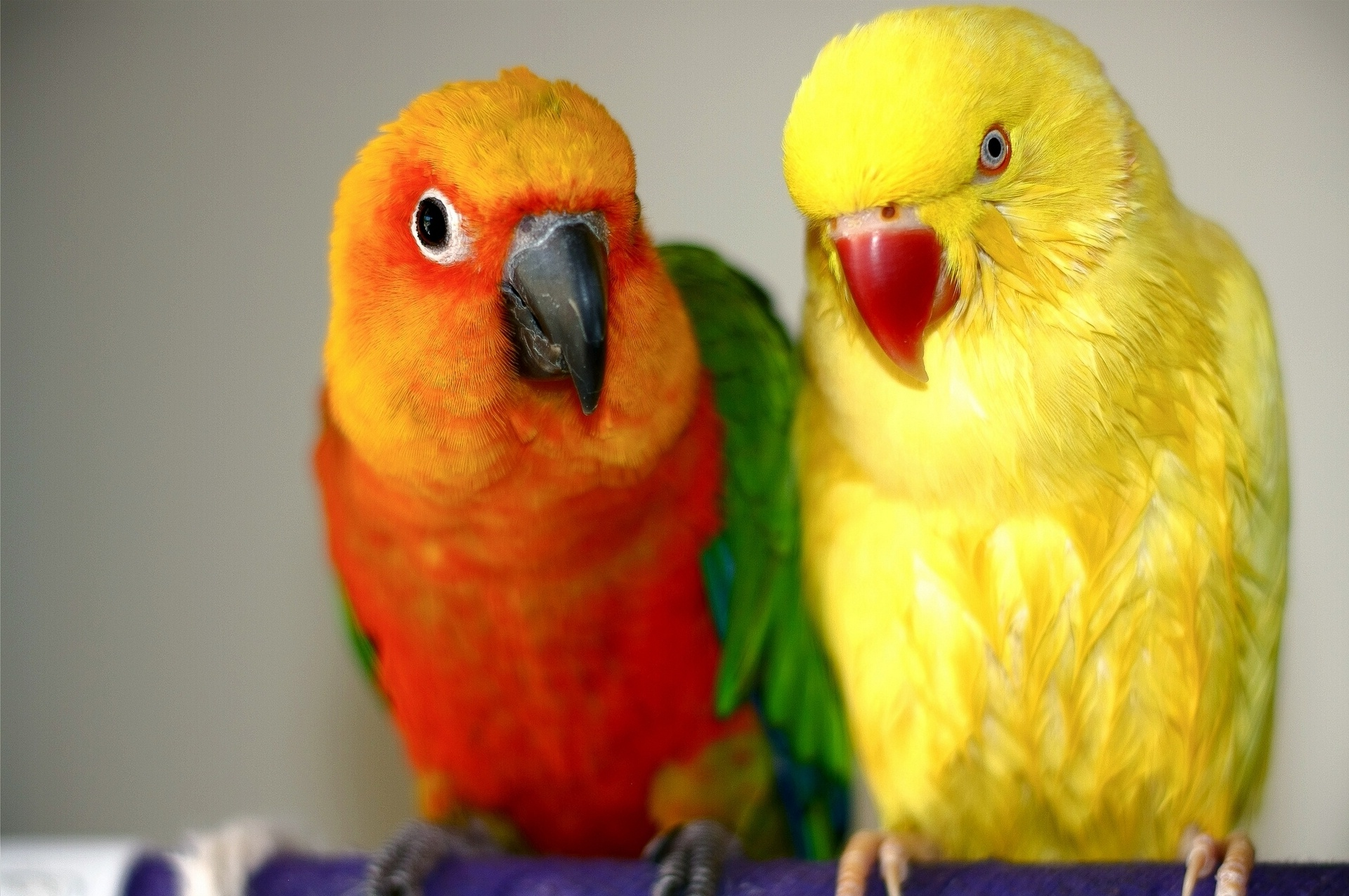 Картинка с попугайчиками, летием