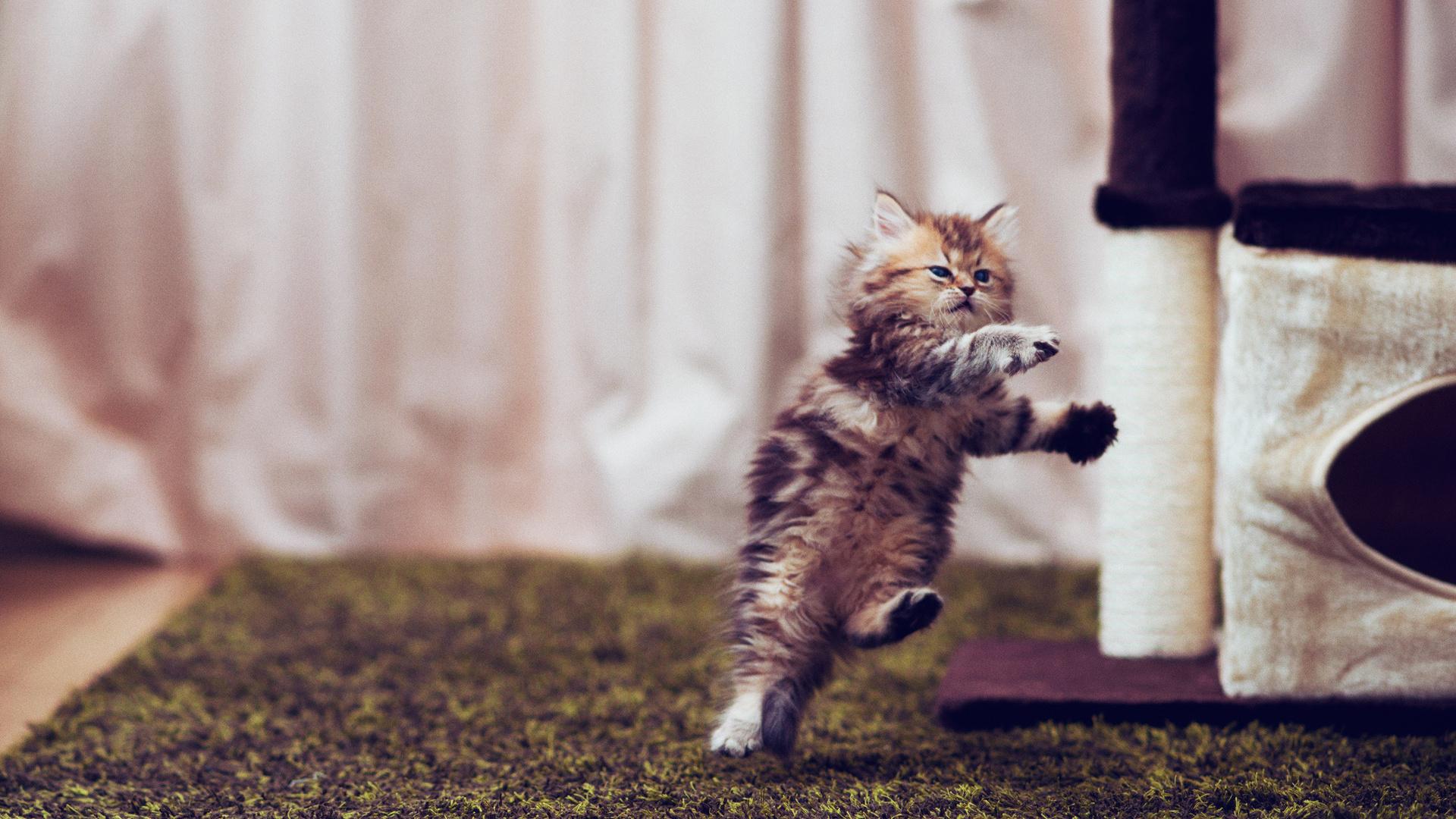 инструкция очень пушистый котик прыгает чат опытным