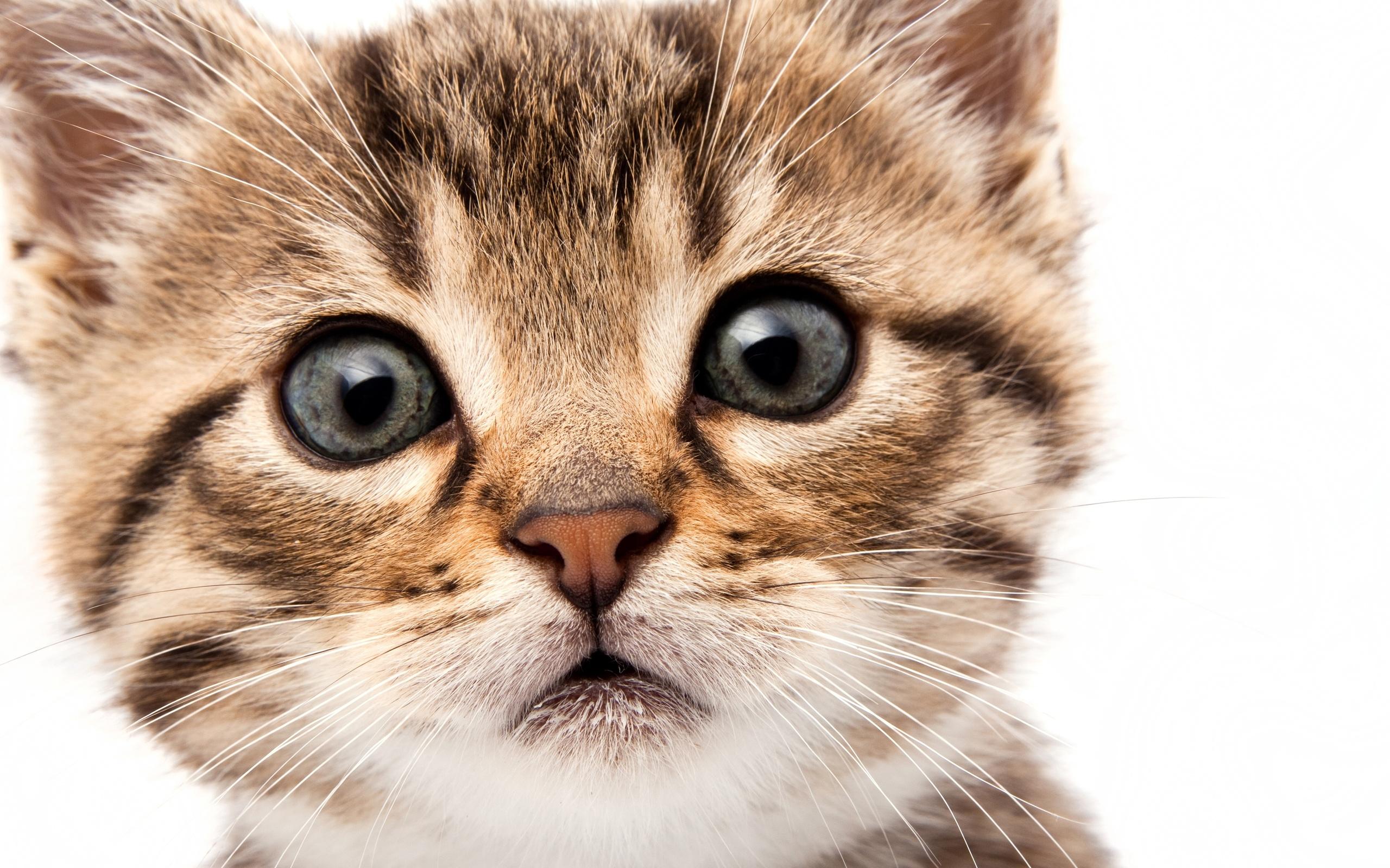 картинки кошачьи мордочки кожи купите прямо