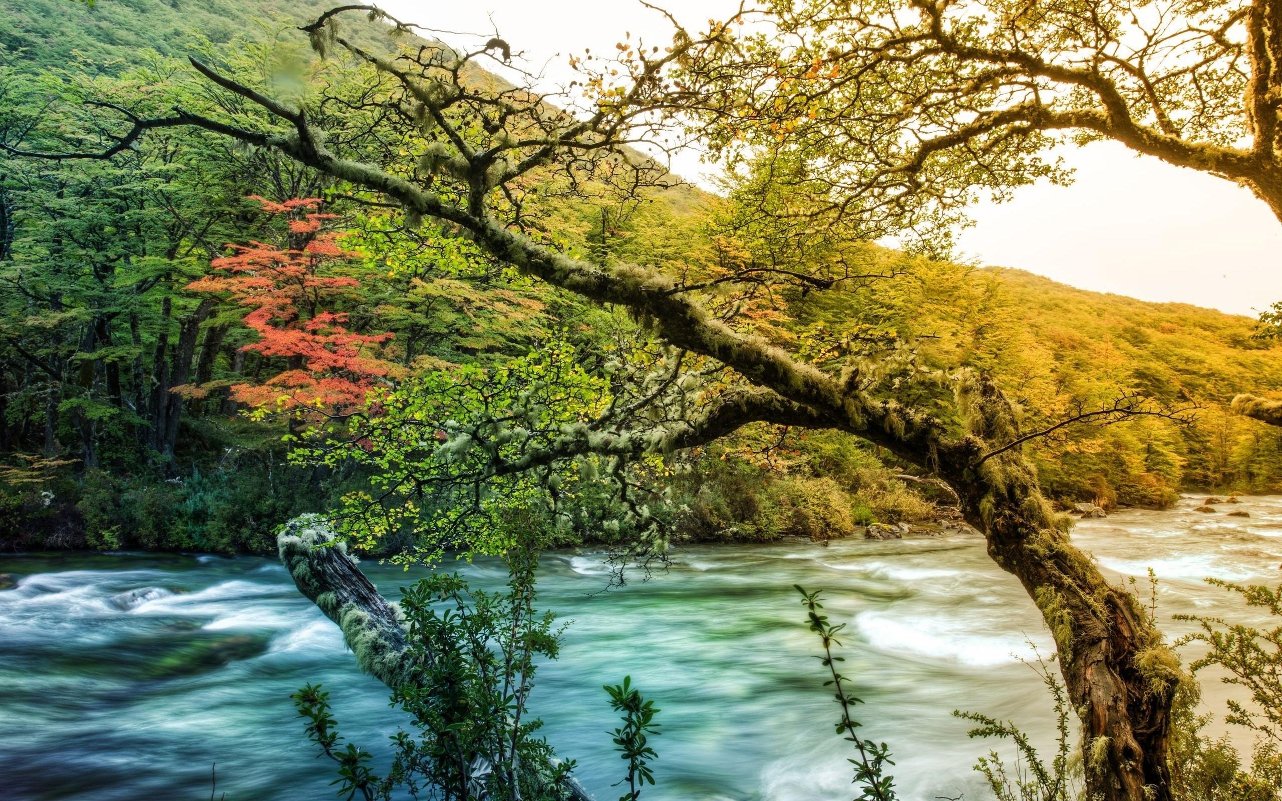 река осень деревья  № 3186356 бесплатно