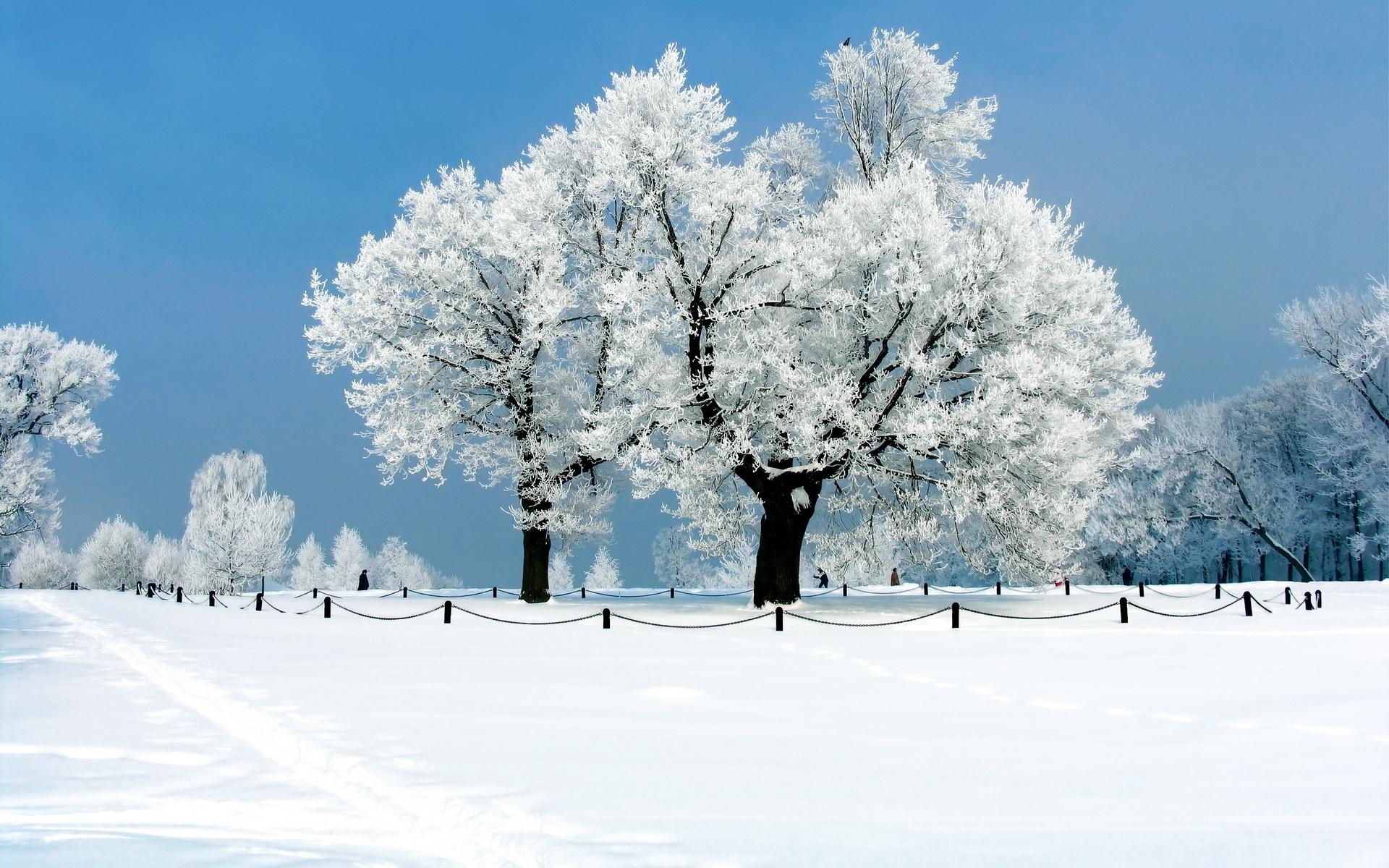 Иней дерево зима скачать