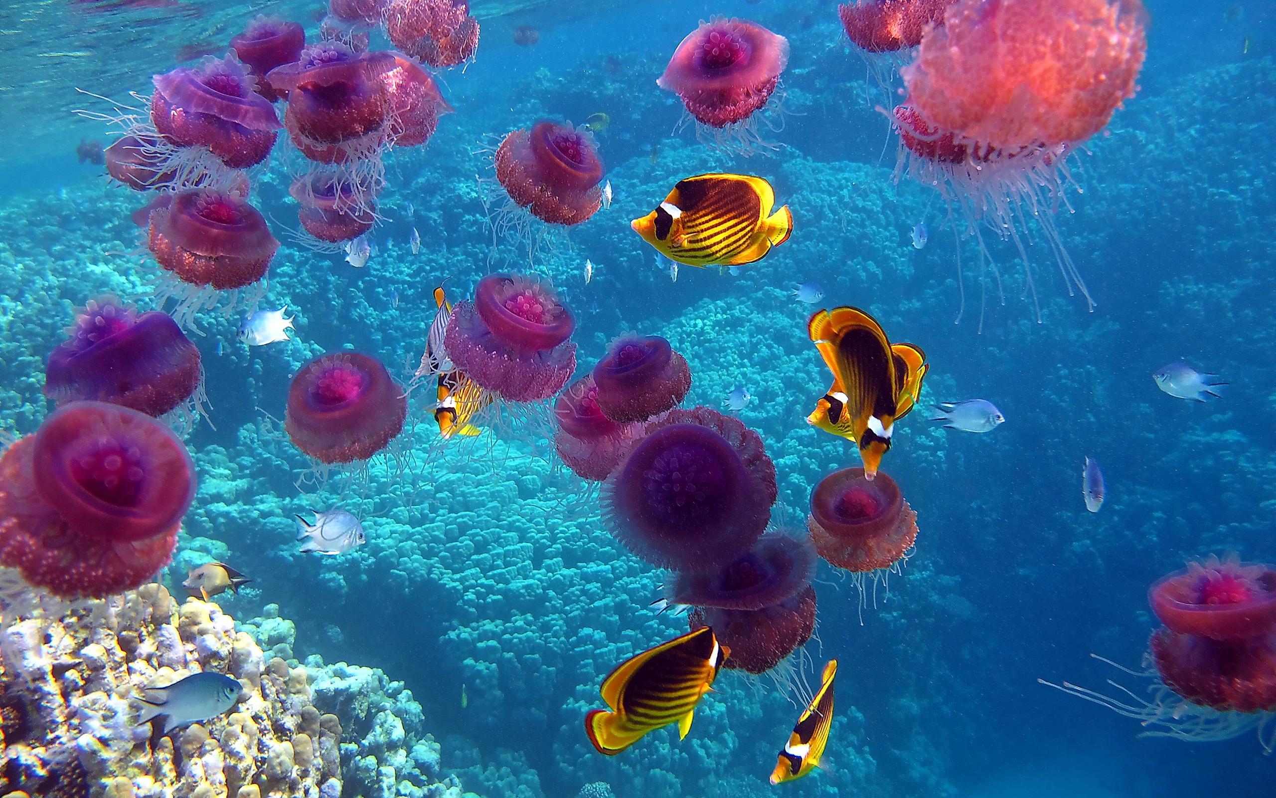 природа рыба море коралловый риф загрузить