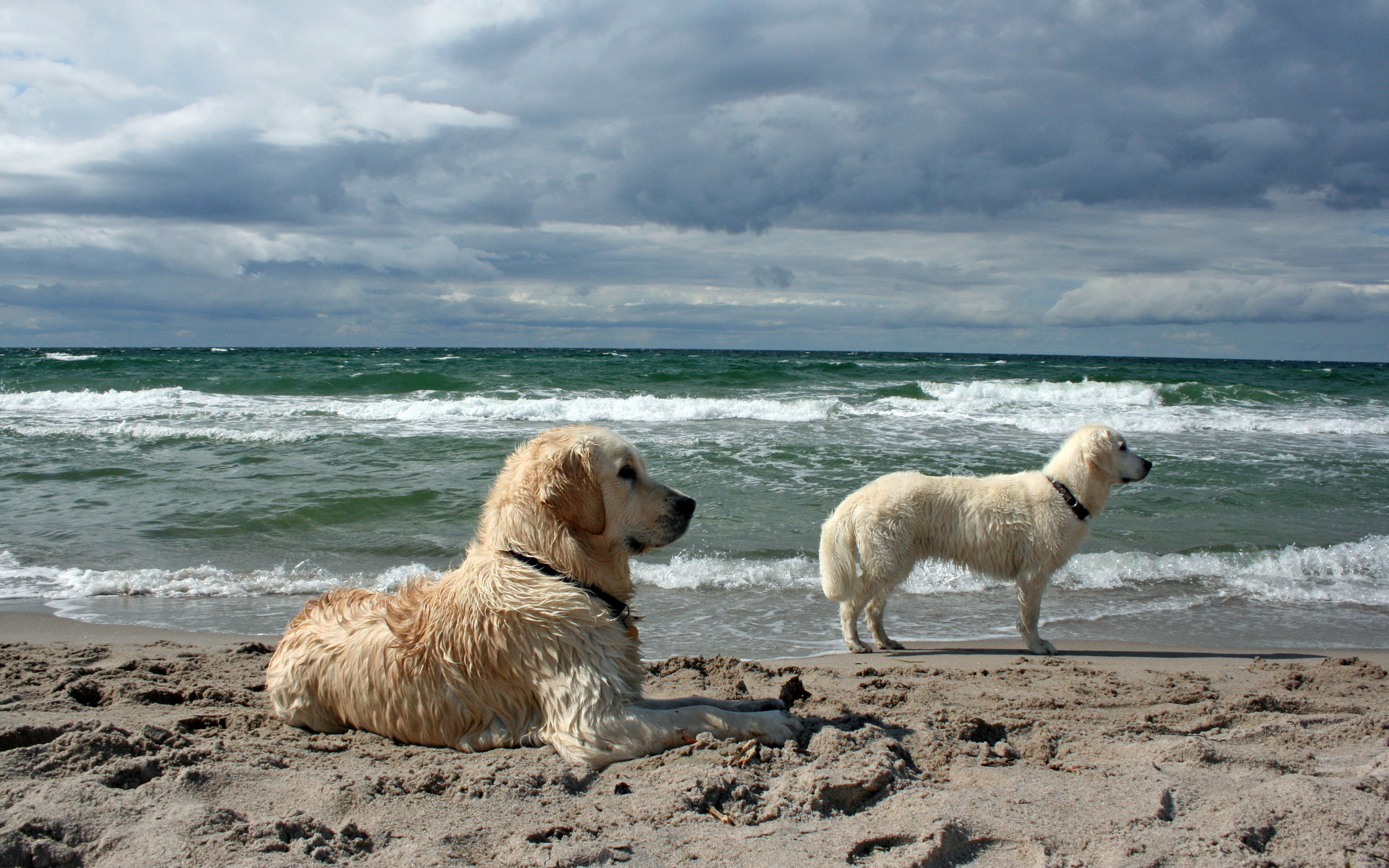 собака пляж песок море спасательный круг загрузить