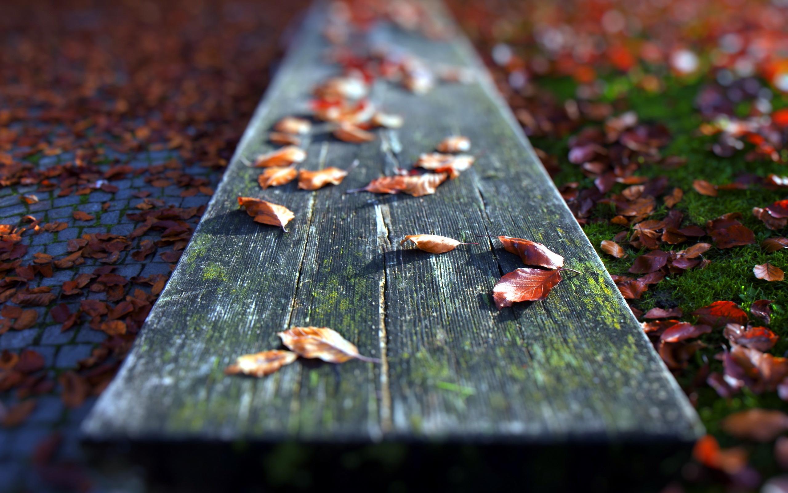 Осень листья лавка стол  № 3187396  скачать