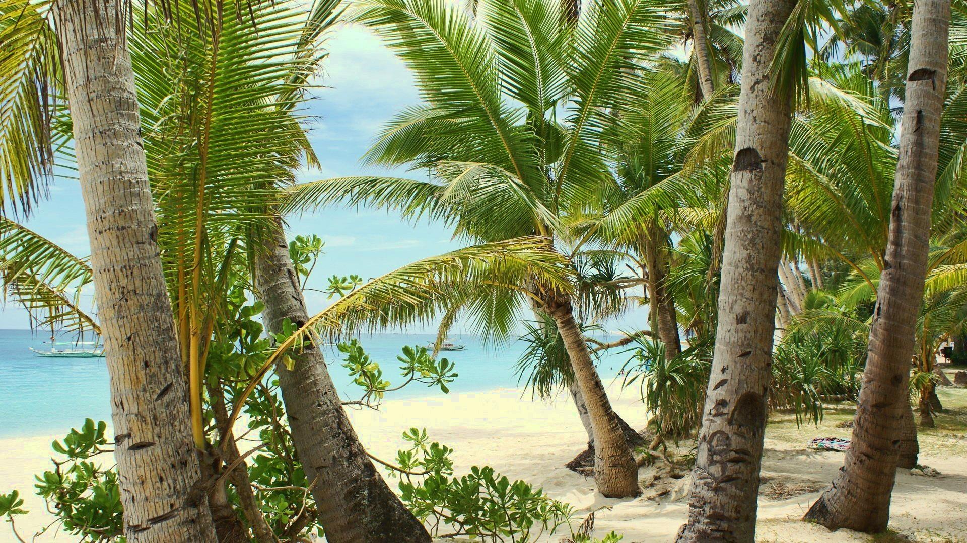 Пляж с лесом без смс