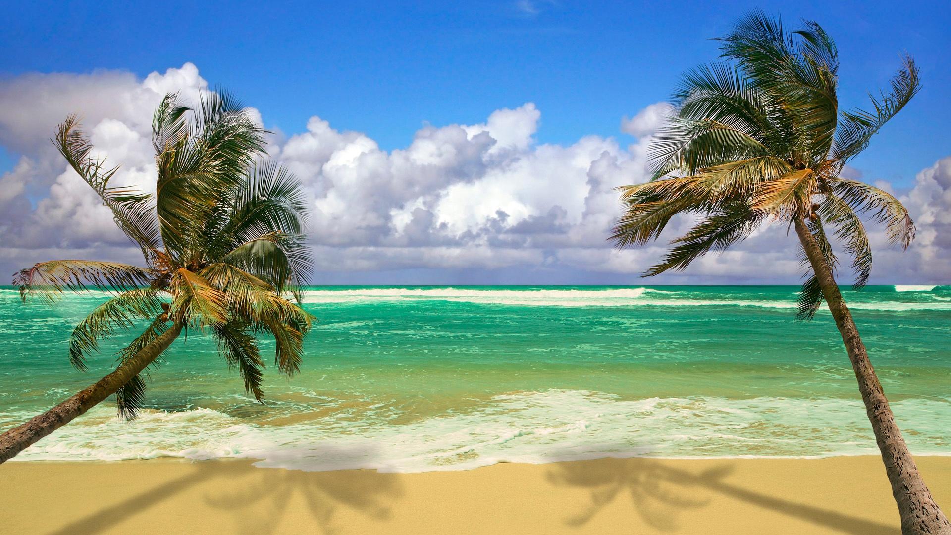 Марта, картинки пляжные пальмами