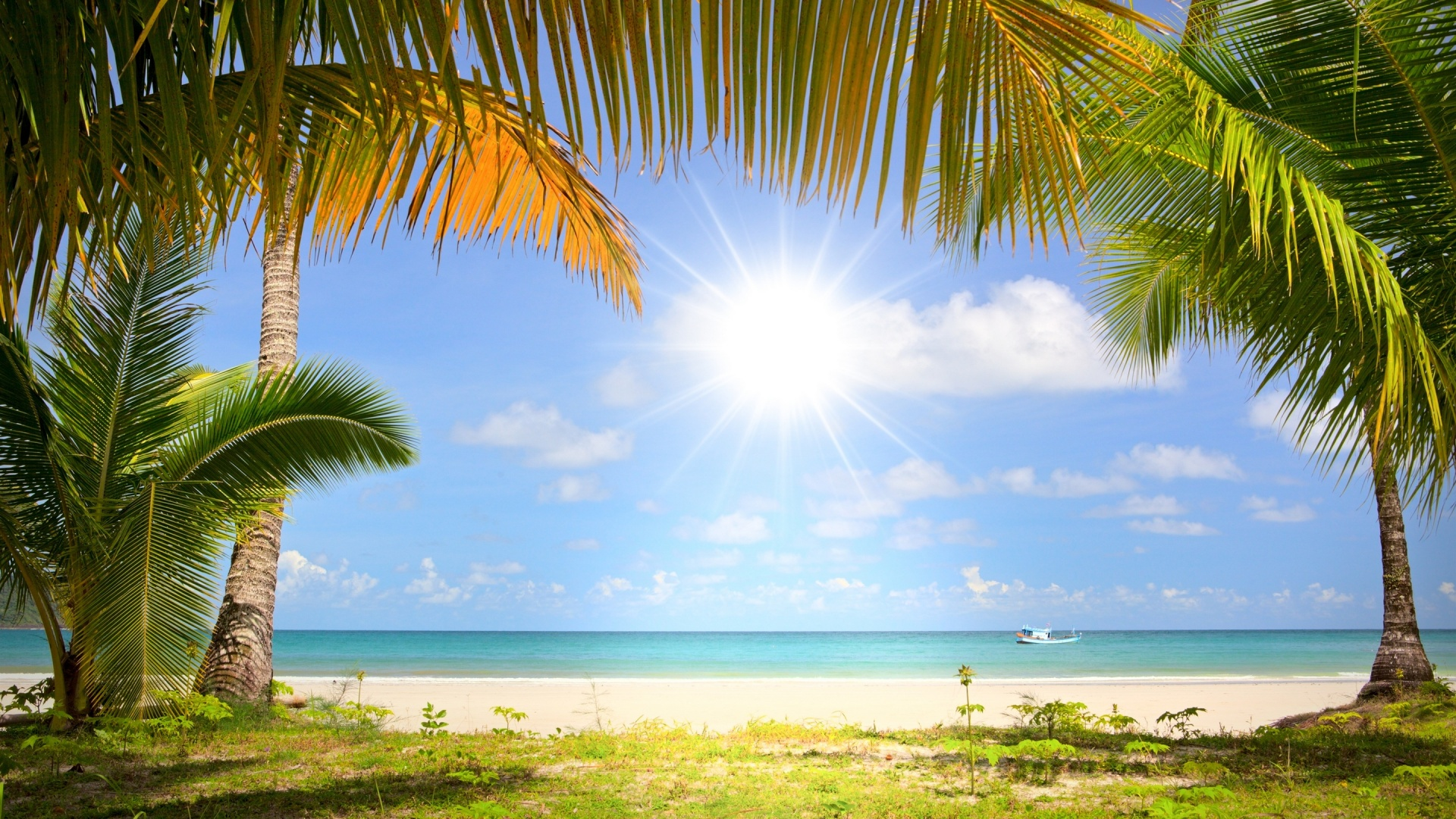 Море пальмы пляж песок загрузить
