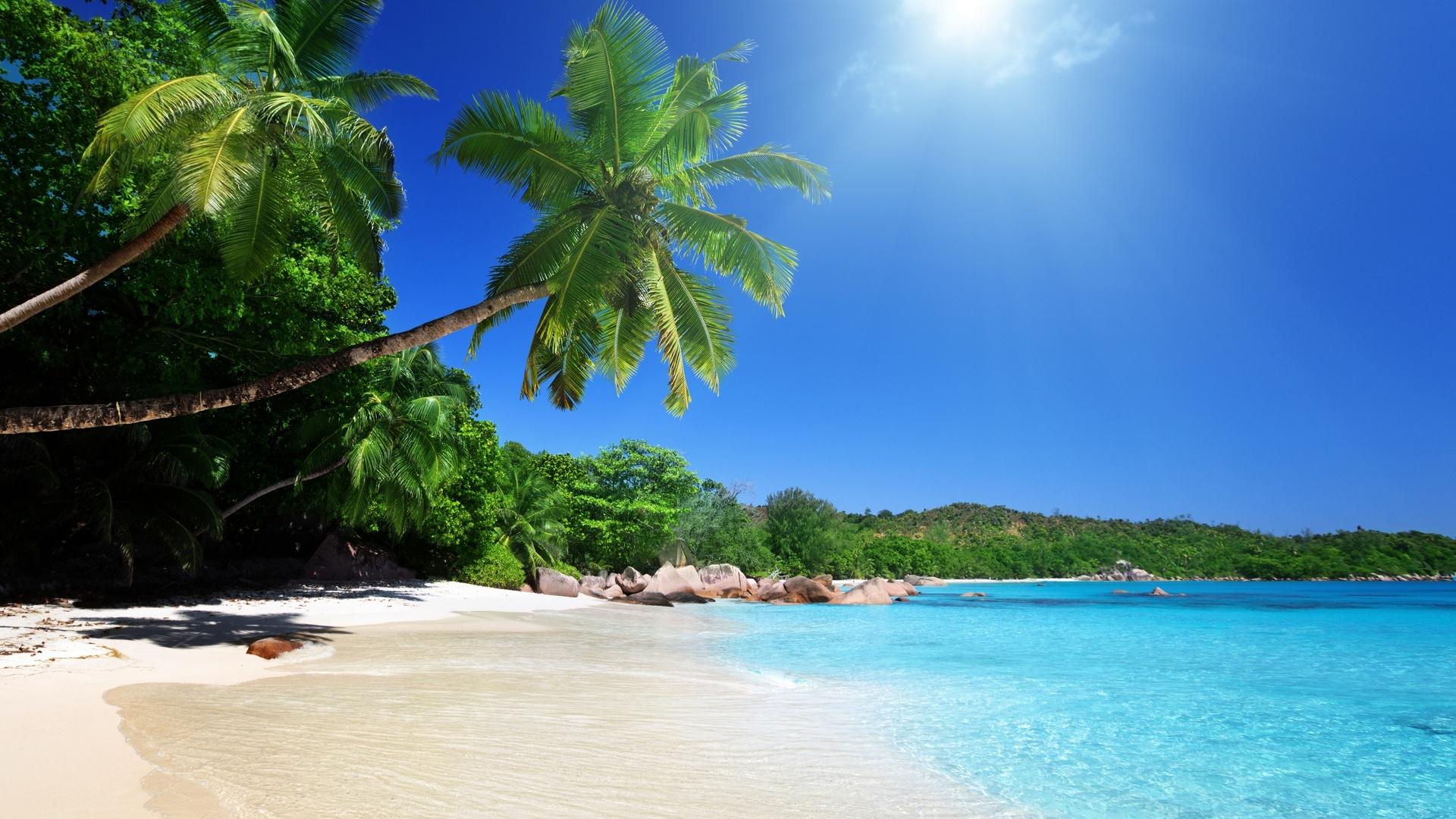 берег пальма море солнце пляж  № 3779882 загрузить