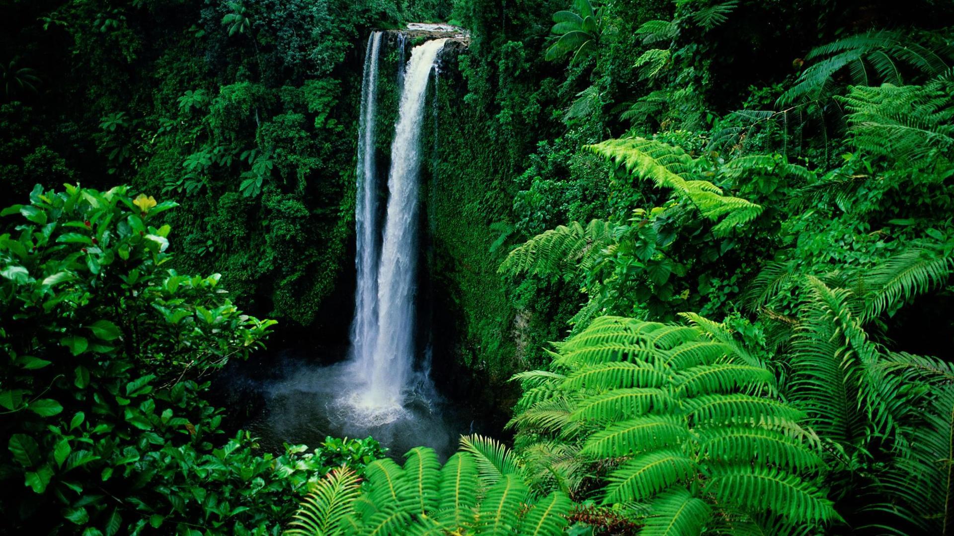 Остров на водопаде анонимно