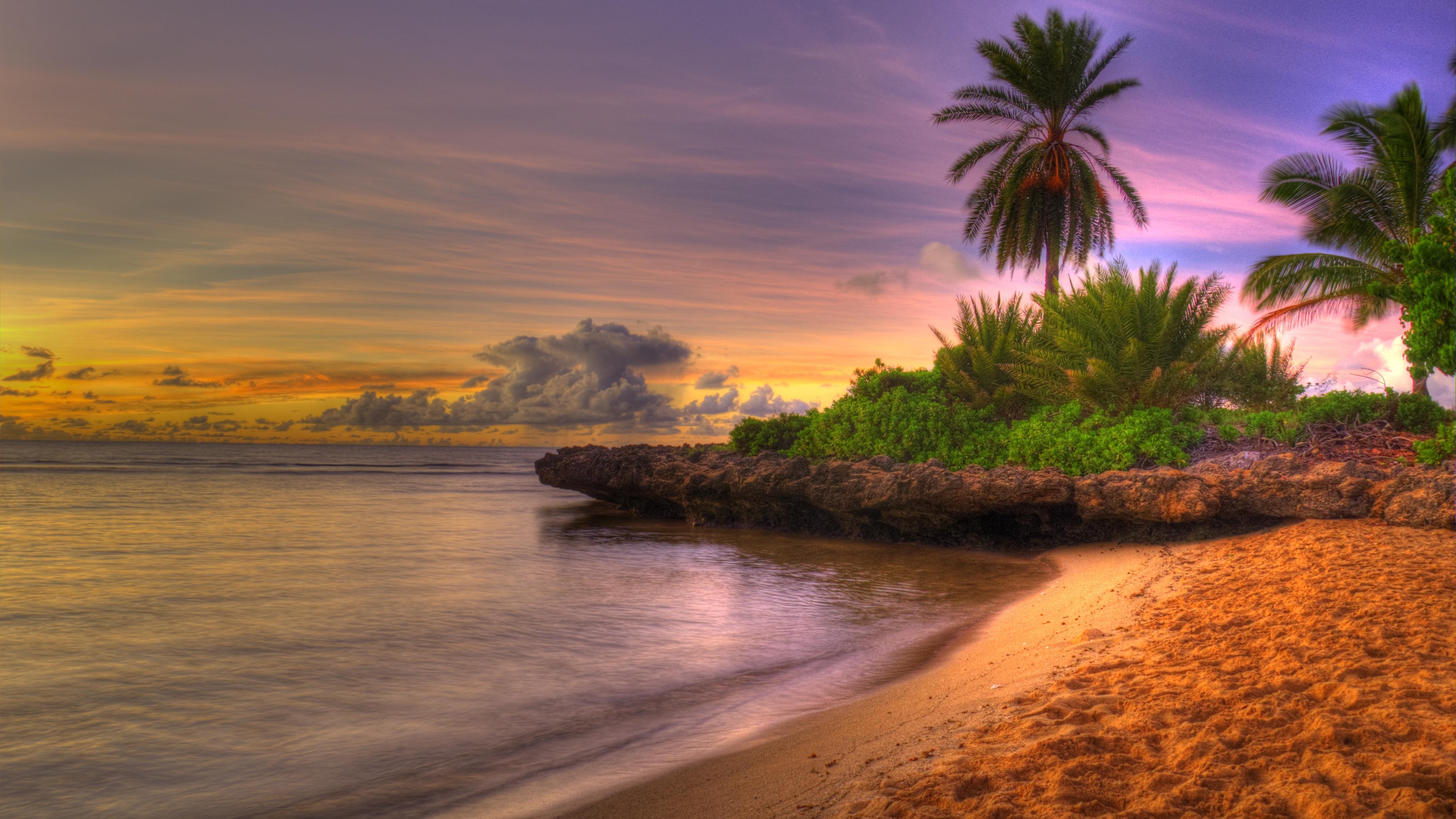 природа деревья море солнце горизонт вечер бесплатно