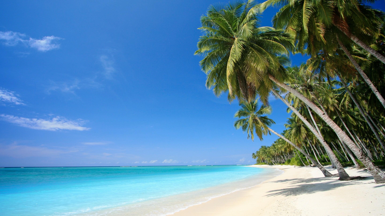 берег пальма море солнце пляж  № 3779760  скачать