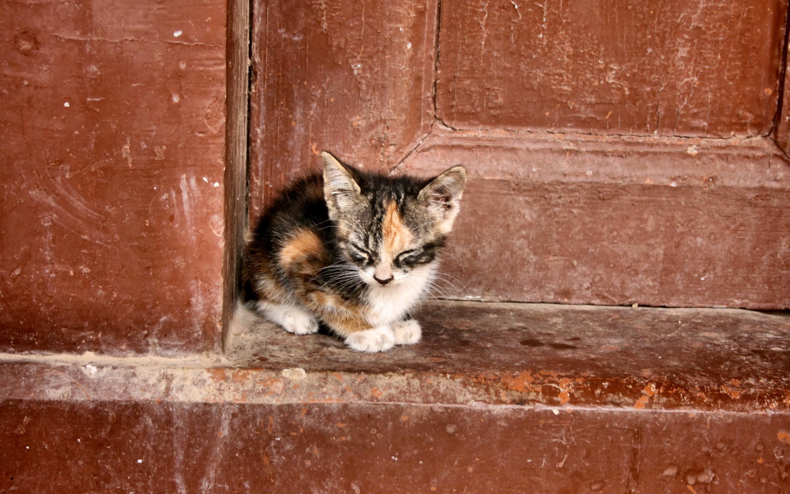 special needs cat litter box