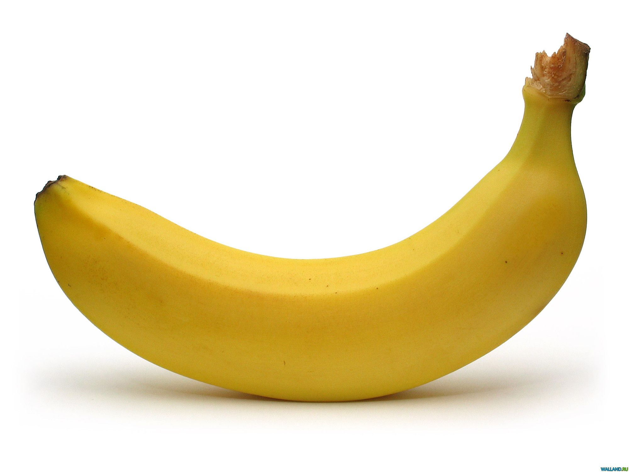 banana spoilage The banana farm is a money-generating tower, and is the only non-secret agent tower that has nothing to do with actually popping bloons(the monkey village does not pop bloons directly, but helps other towers pop bloons).