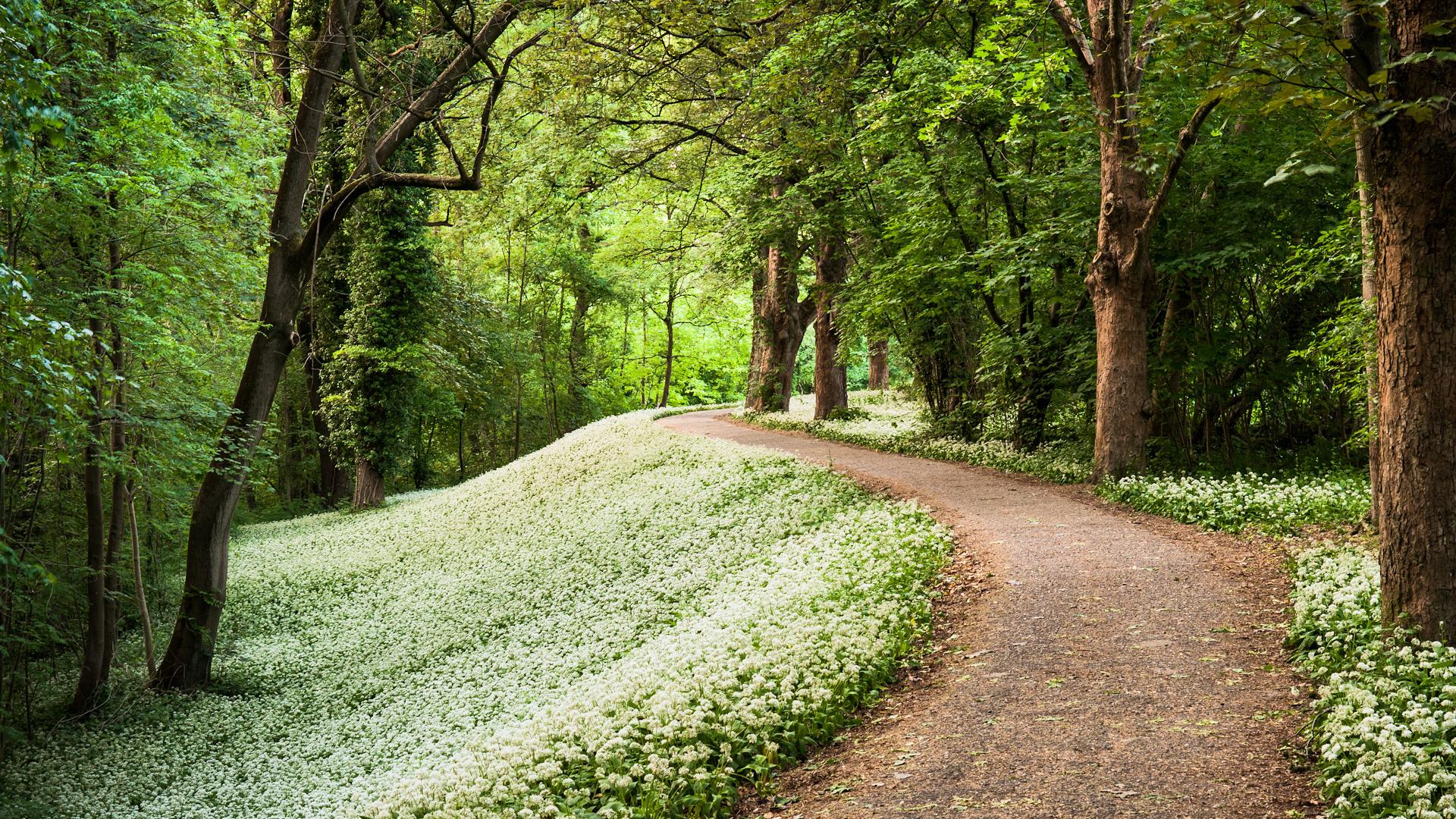 природа деревья лес тропа  № 1206370 без смс